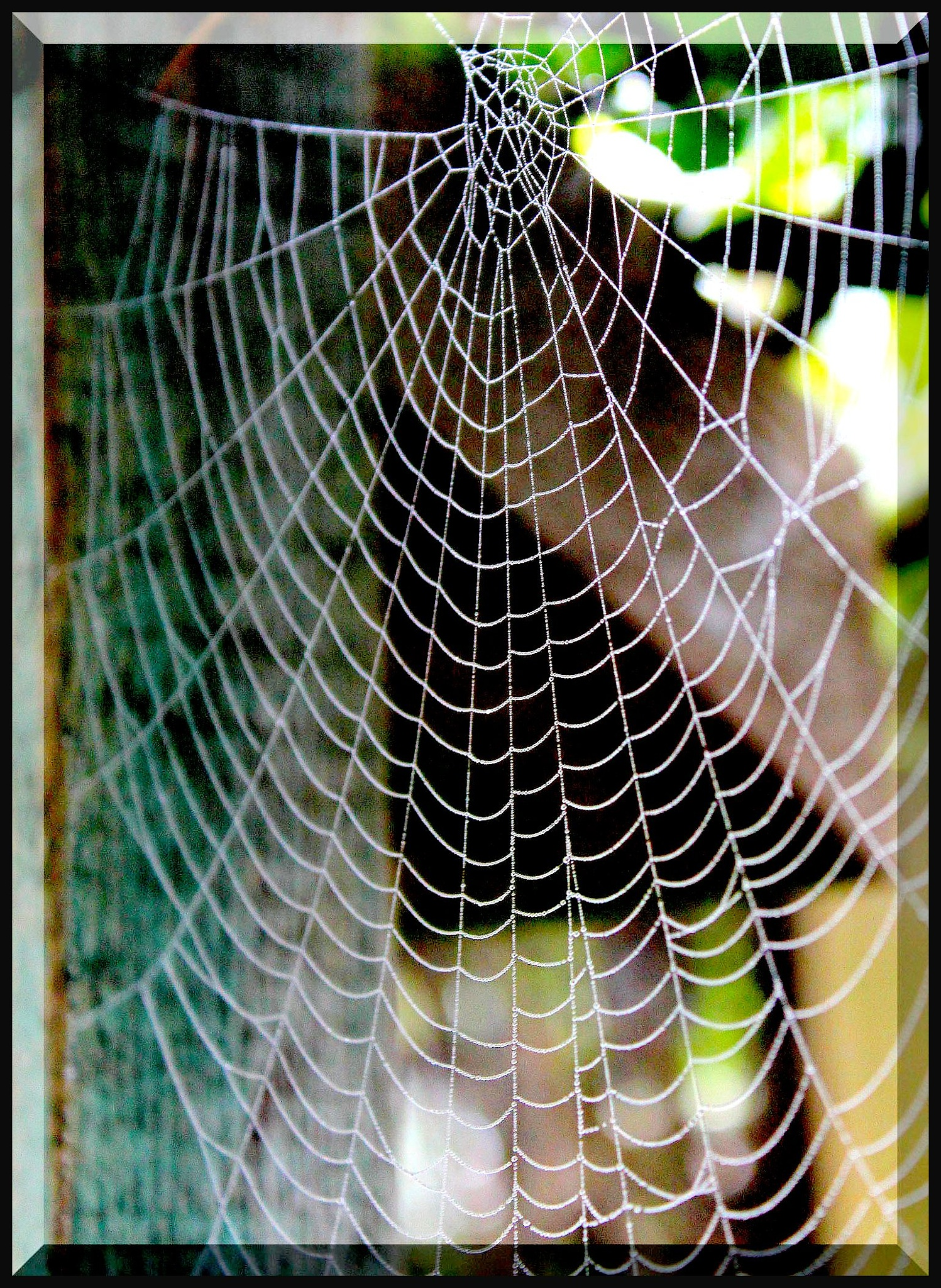 The Web by Terry Jackson
