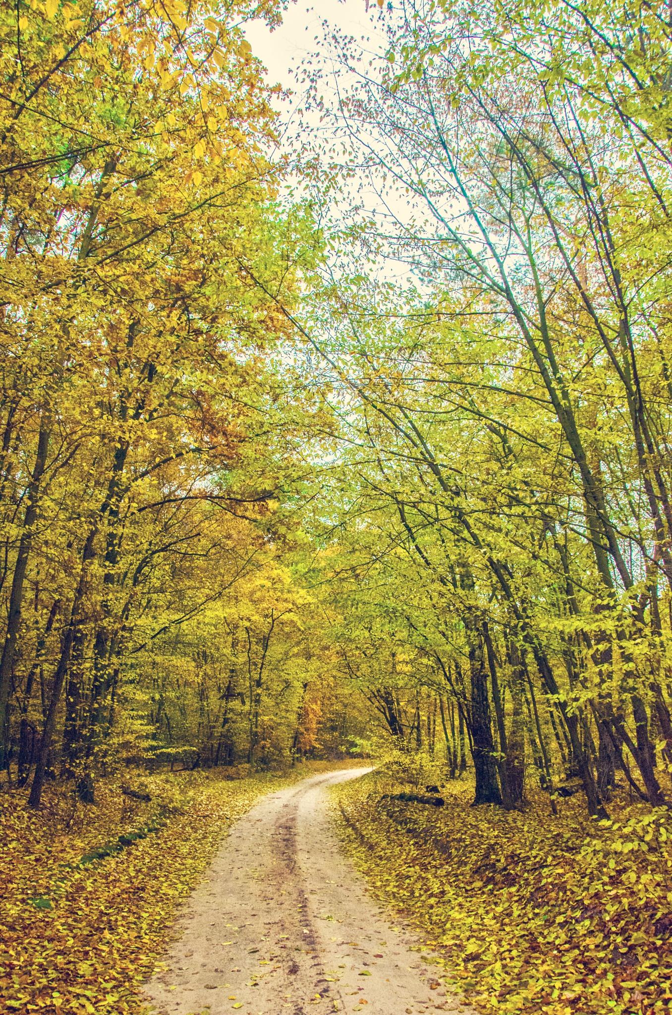 Autumn  by Dagmarka04