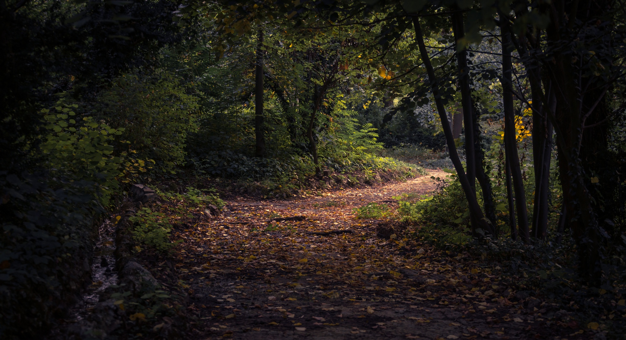 Mystery Forest by Anton Atanasov