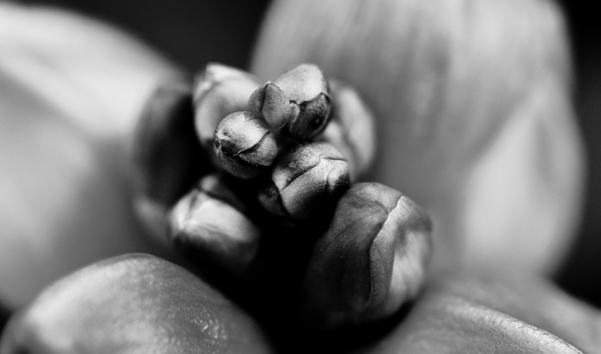 Black and White Macro: by balgot15