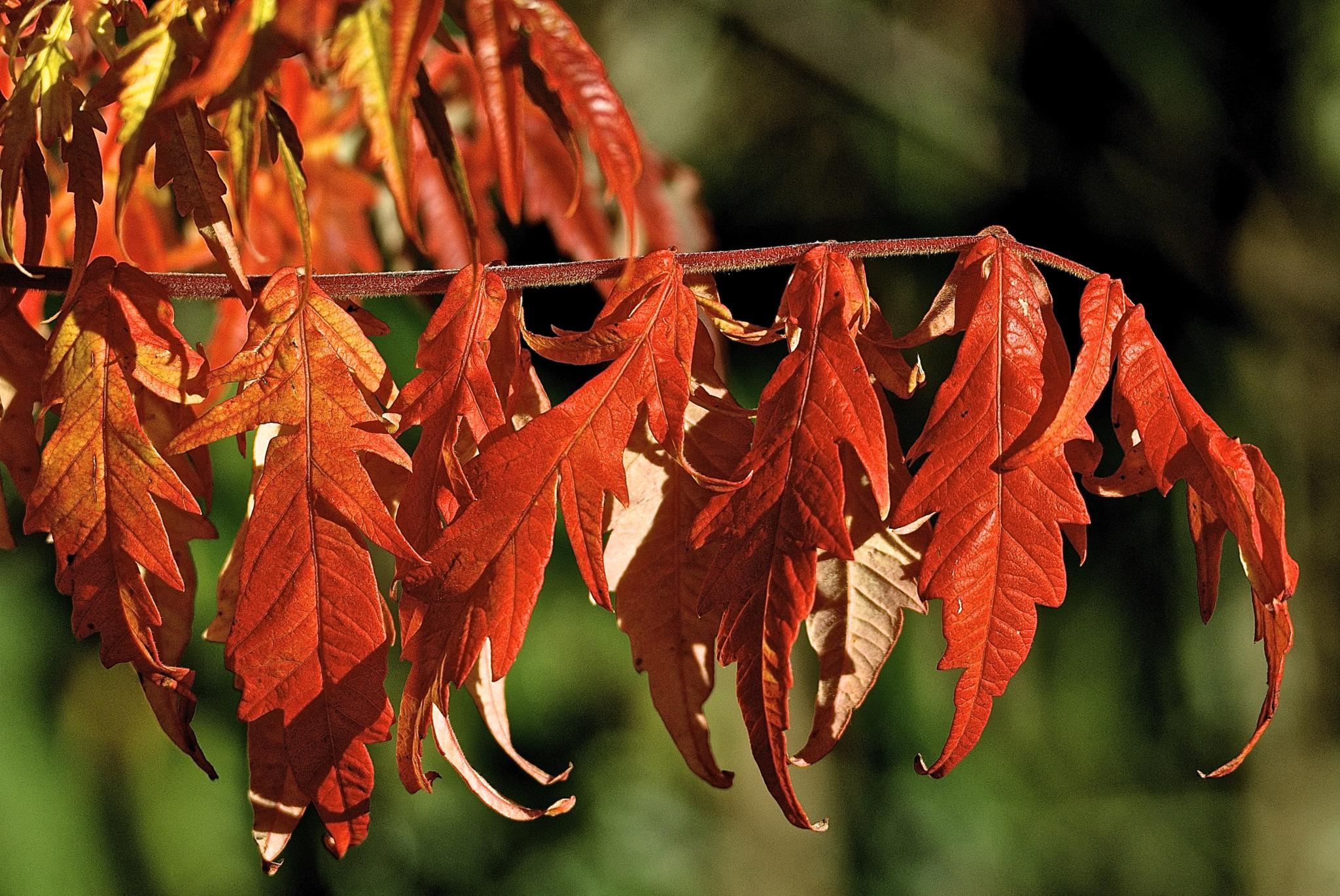 Autumn Reds by gordon veitch