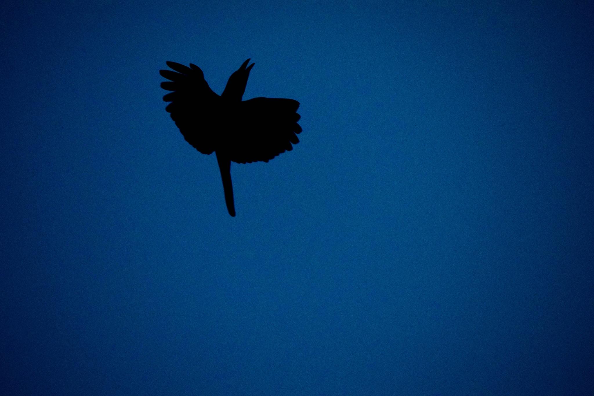 Mid air silhouette... by Parijat Kundu