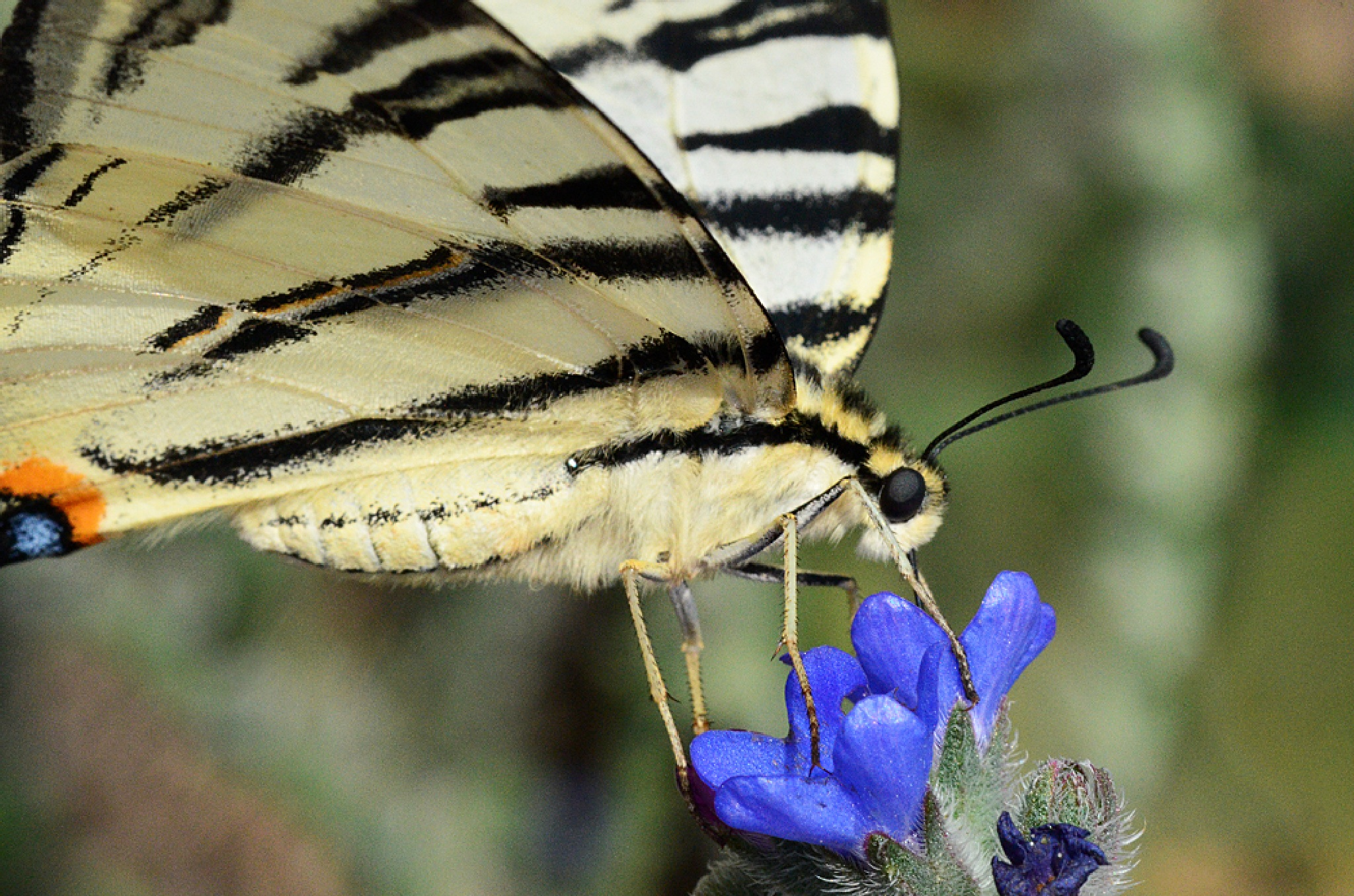 Butterfly by Ümit Alper TÜMEN