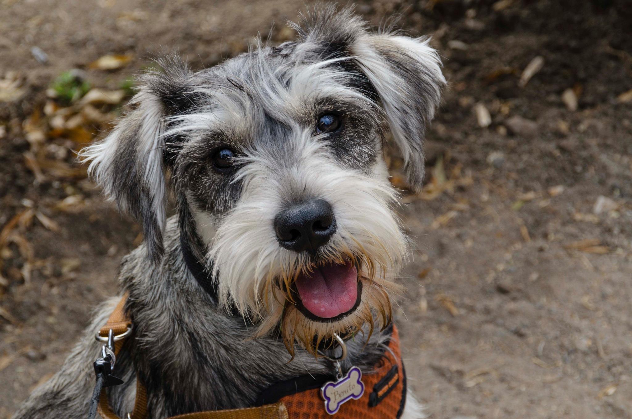 Mi perro by Ricardo Calquín D.
