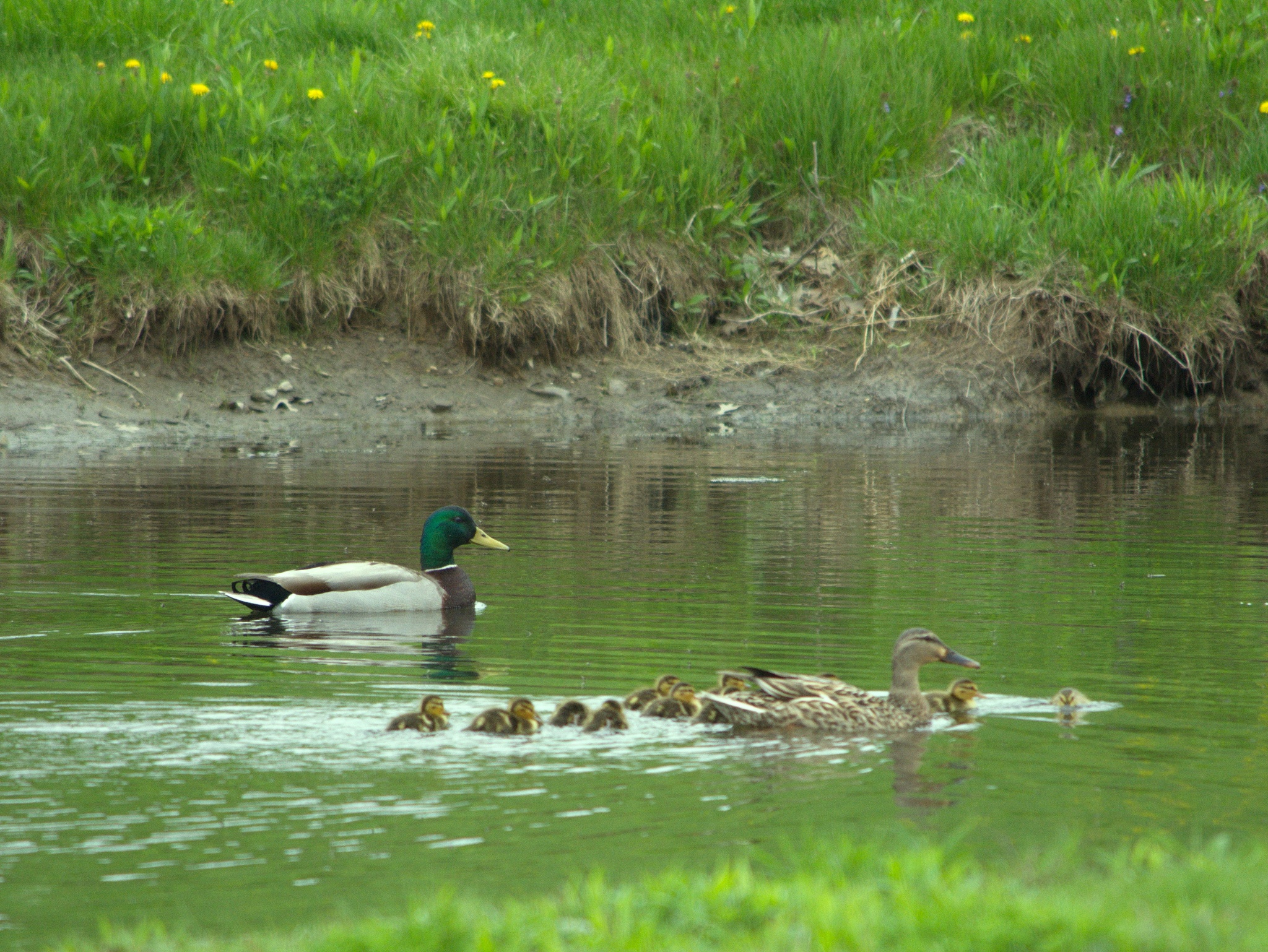 First Family Swim by Russ L Busse