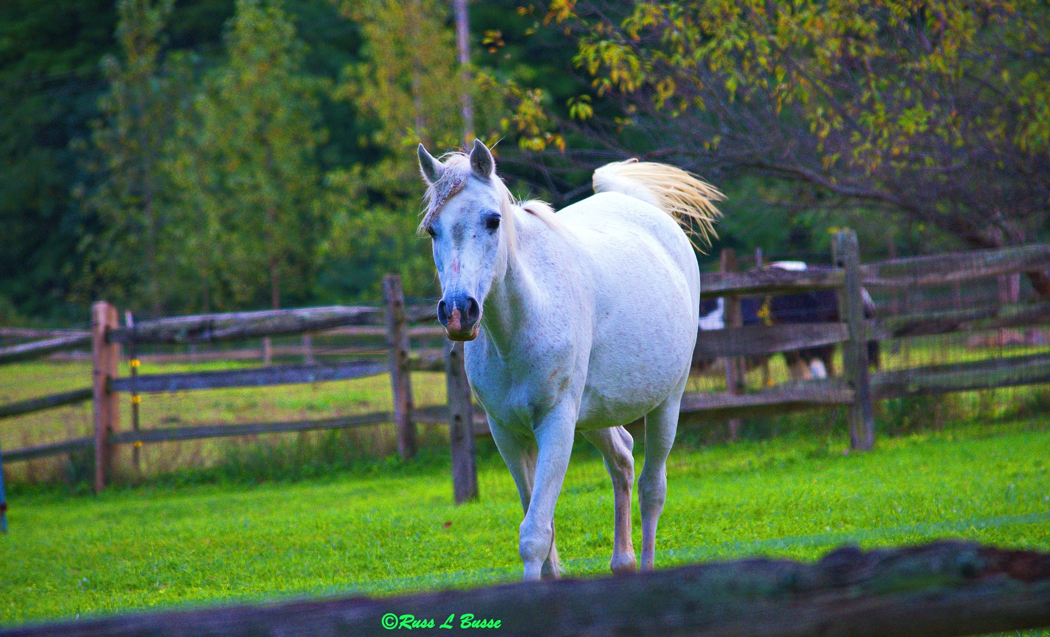 Horseplay by Russ L Busse