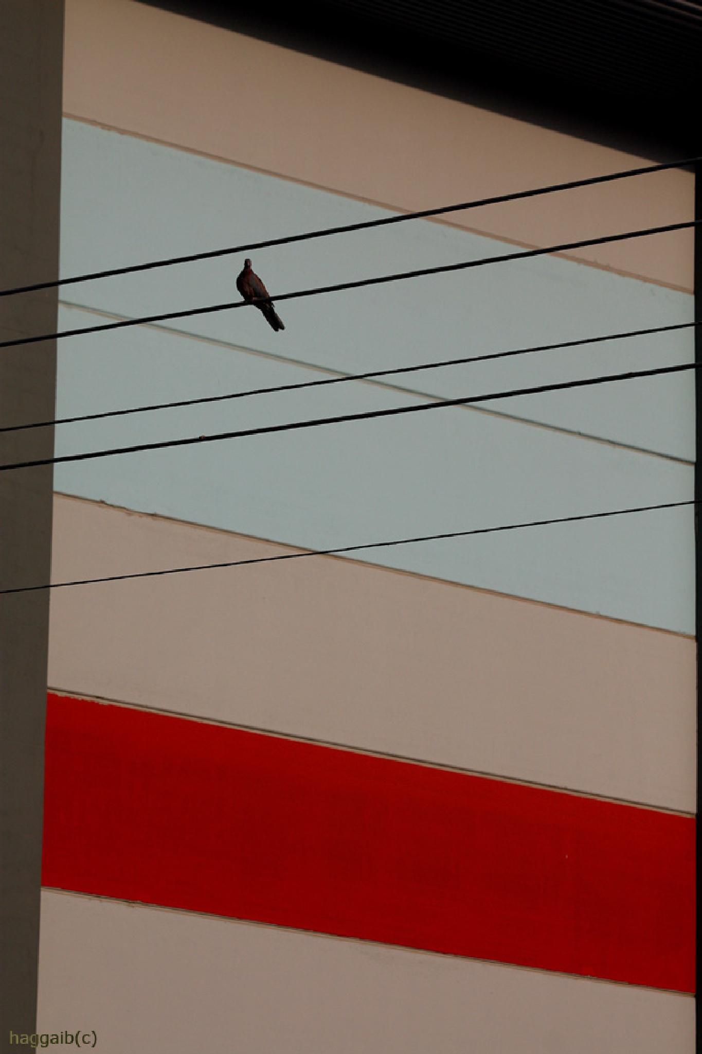 Dove by hbenyehuda