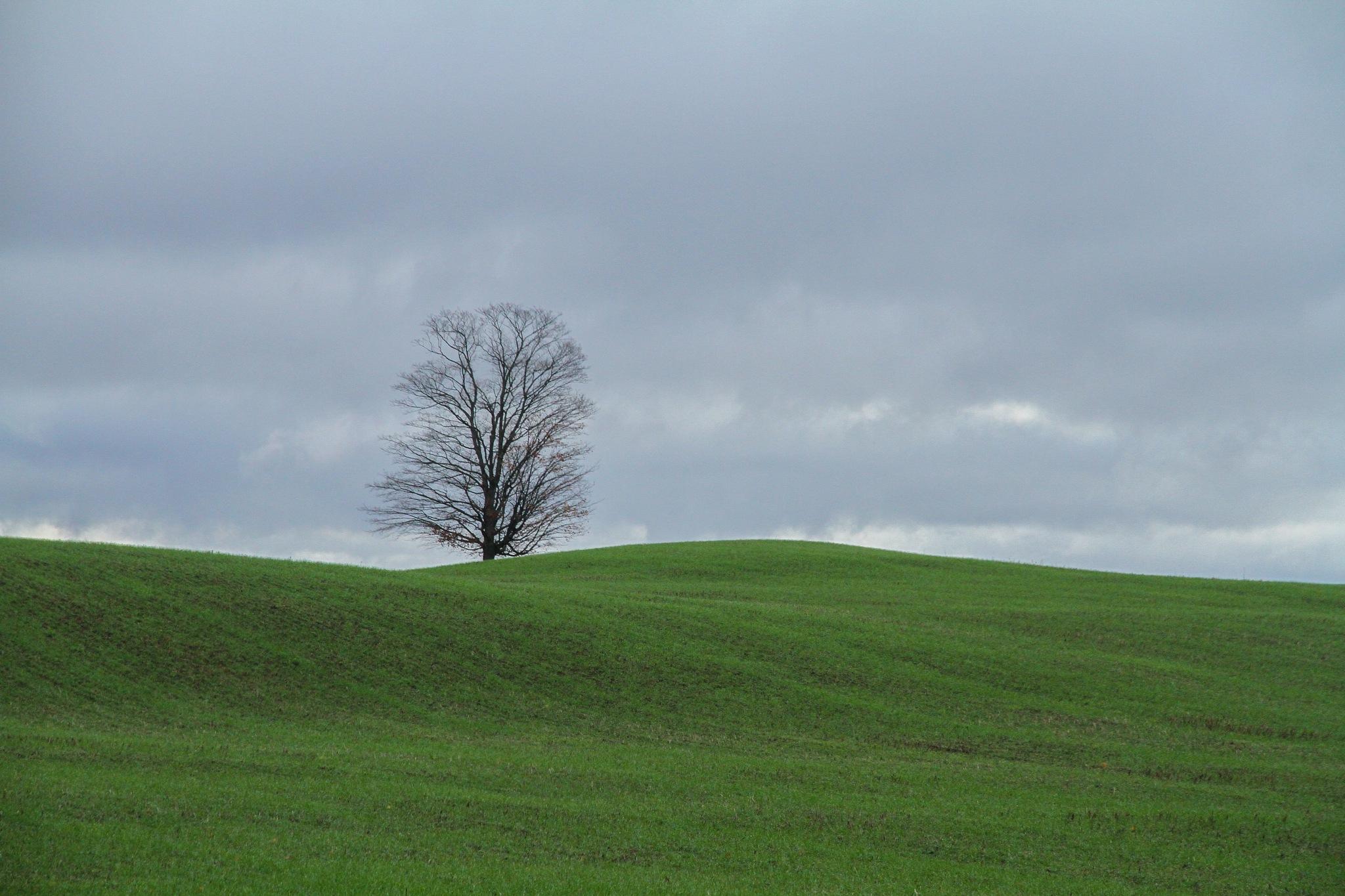 One Tree Hill by El Merrifield