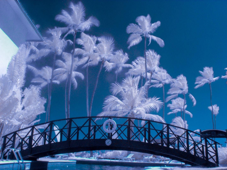 Palm Afternoon by El Merrifield
