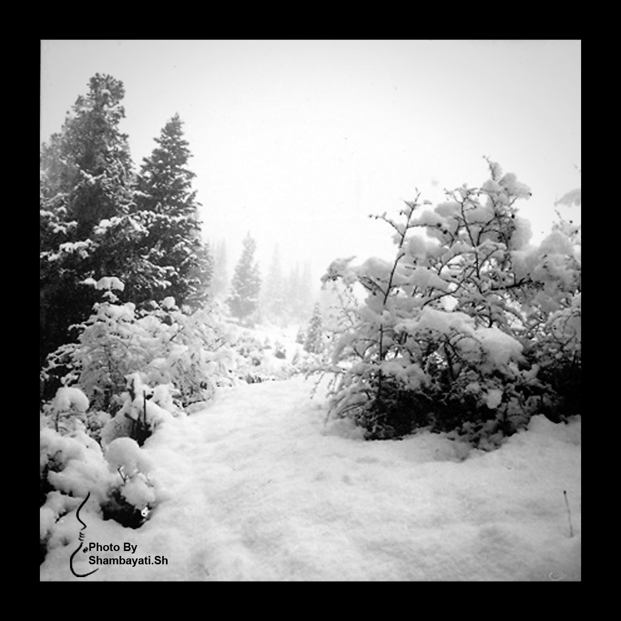 Snow by artist86