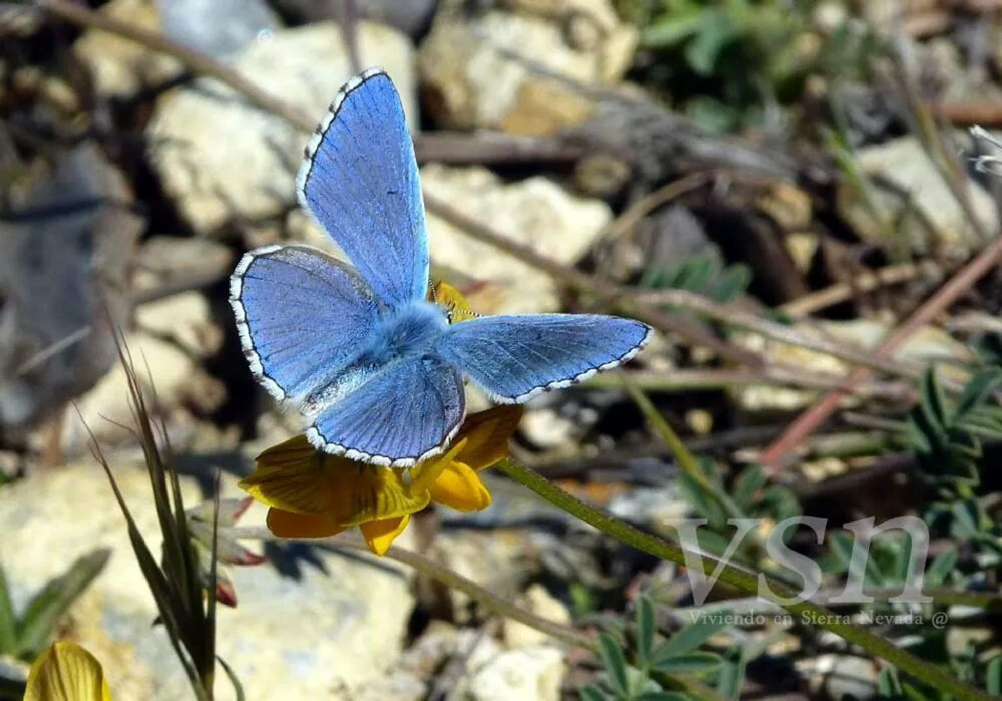 Butterfly  by Green Peaks Granada