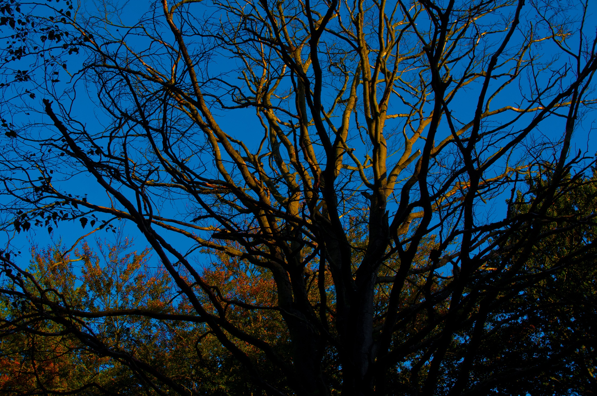 Some branches by Aperazzo