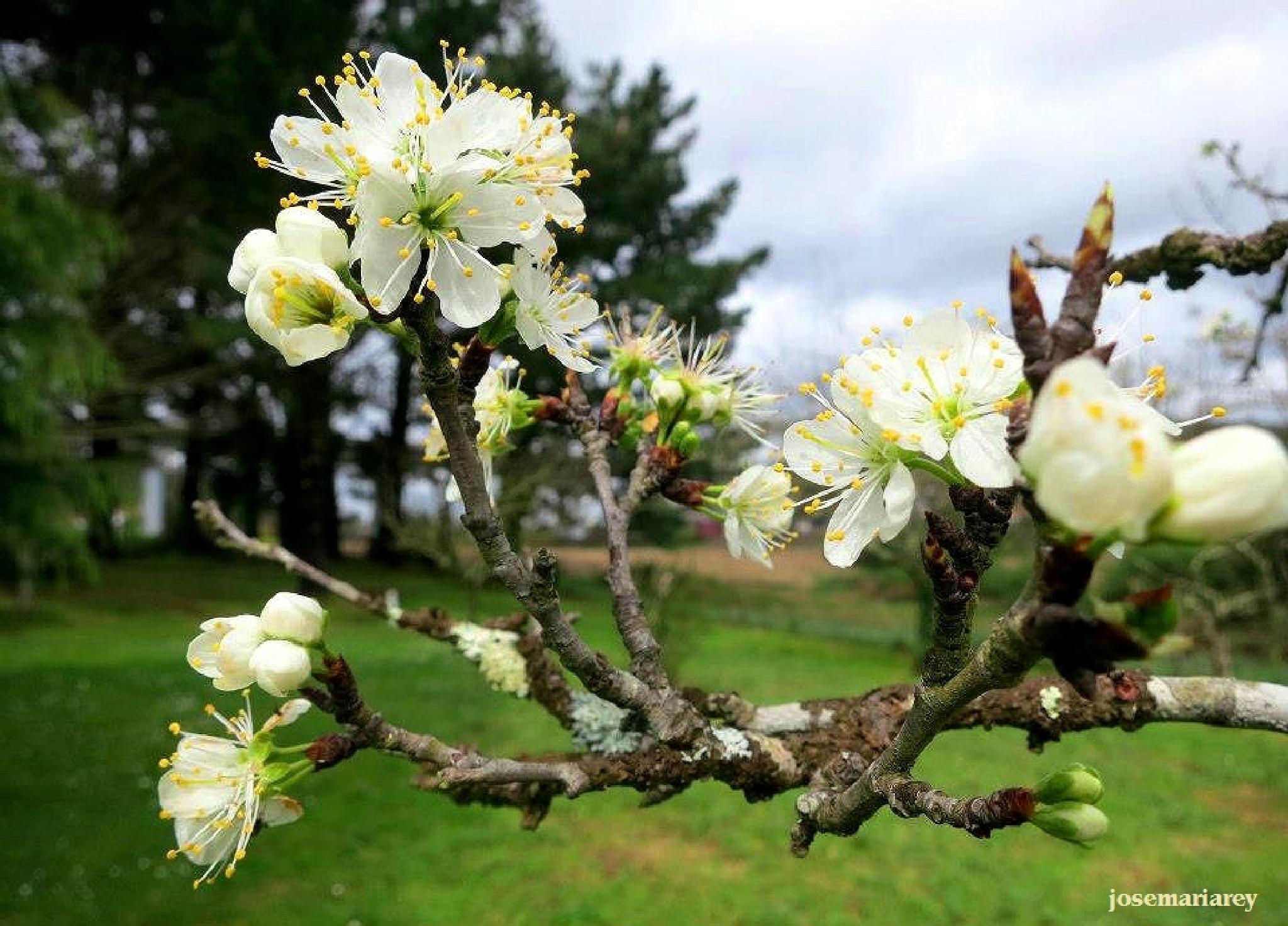 La Primavera by josemariareymontes