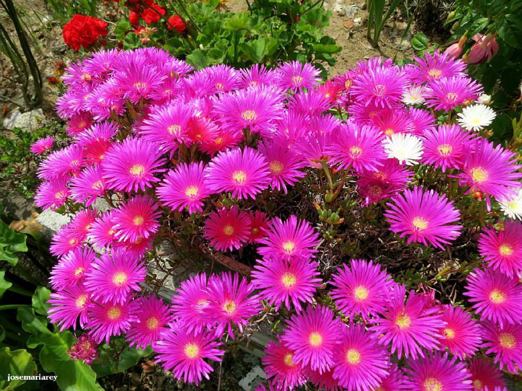 Flores silvestres. by josemariareymontes