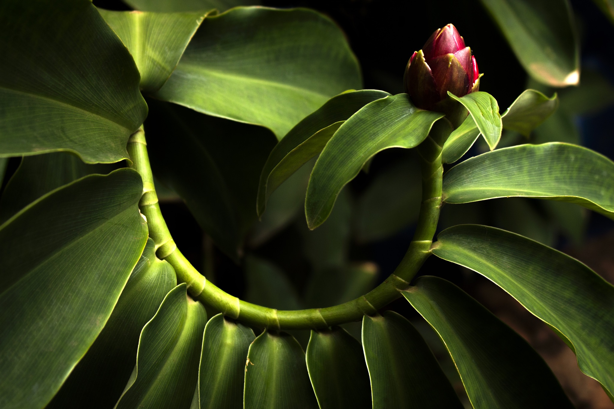 The nature exhibiting its curves by Nitt Marques