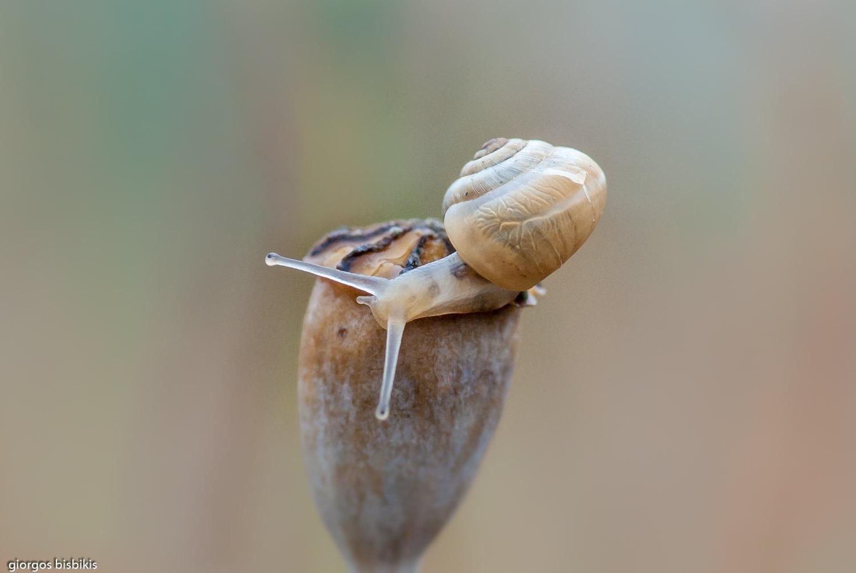 snail by bisbikisg