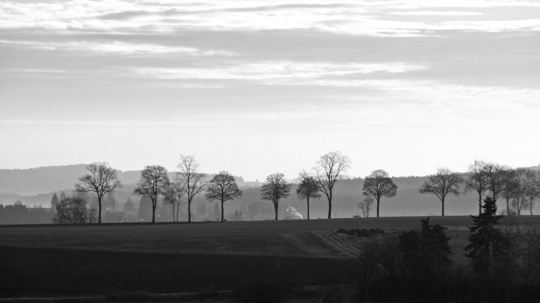 early morning... by  Jutta