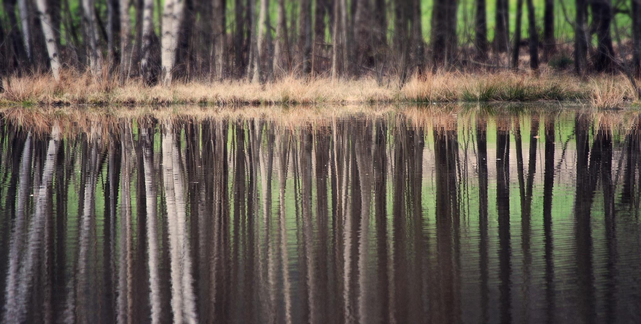 many trees....;)  by  Jutta
