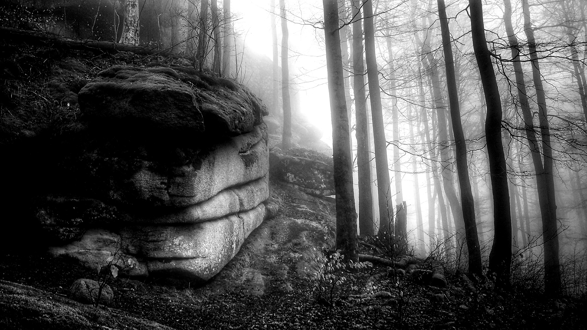 Old stones and trees... by  Jutta