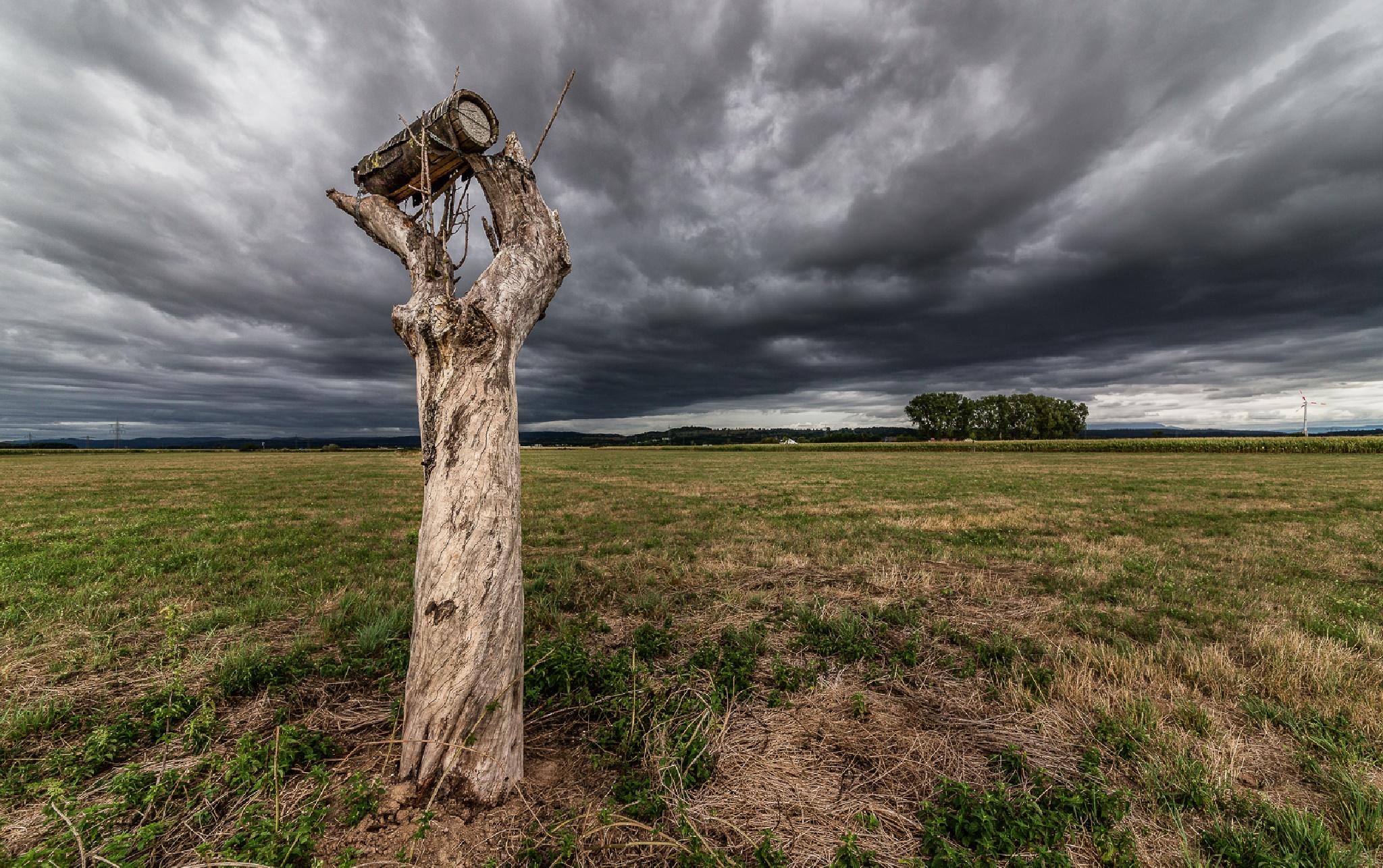 alone by Giampiero Resta