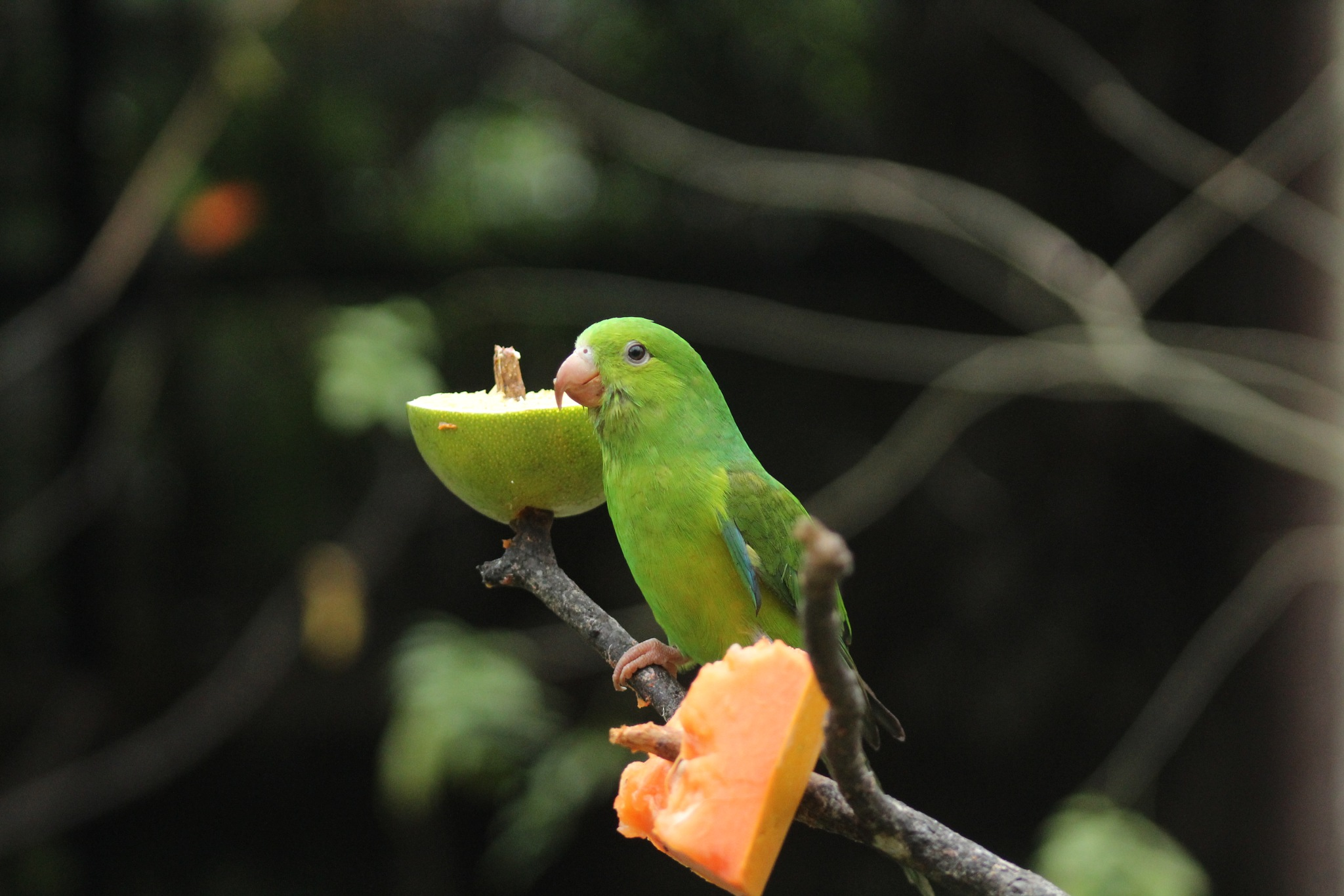 Green by Henrique L. Coubert