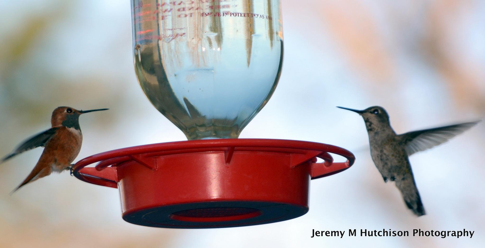 Hummingbird Breakfast  by Jeremy M Hutchison