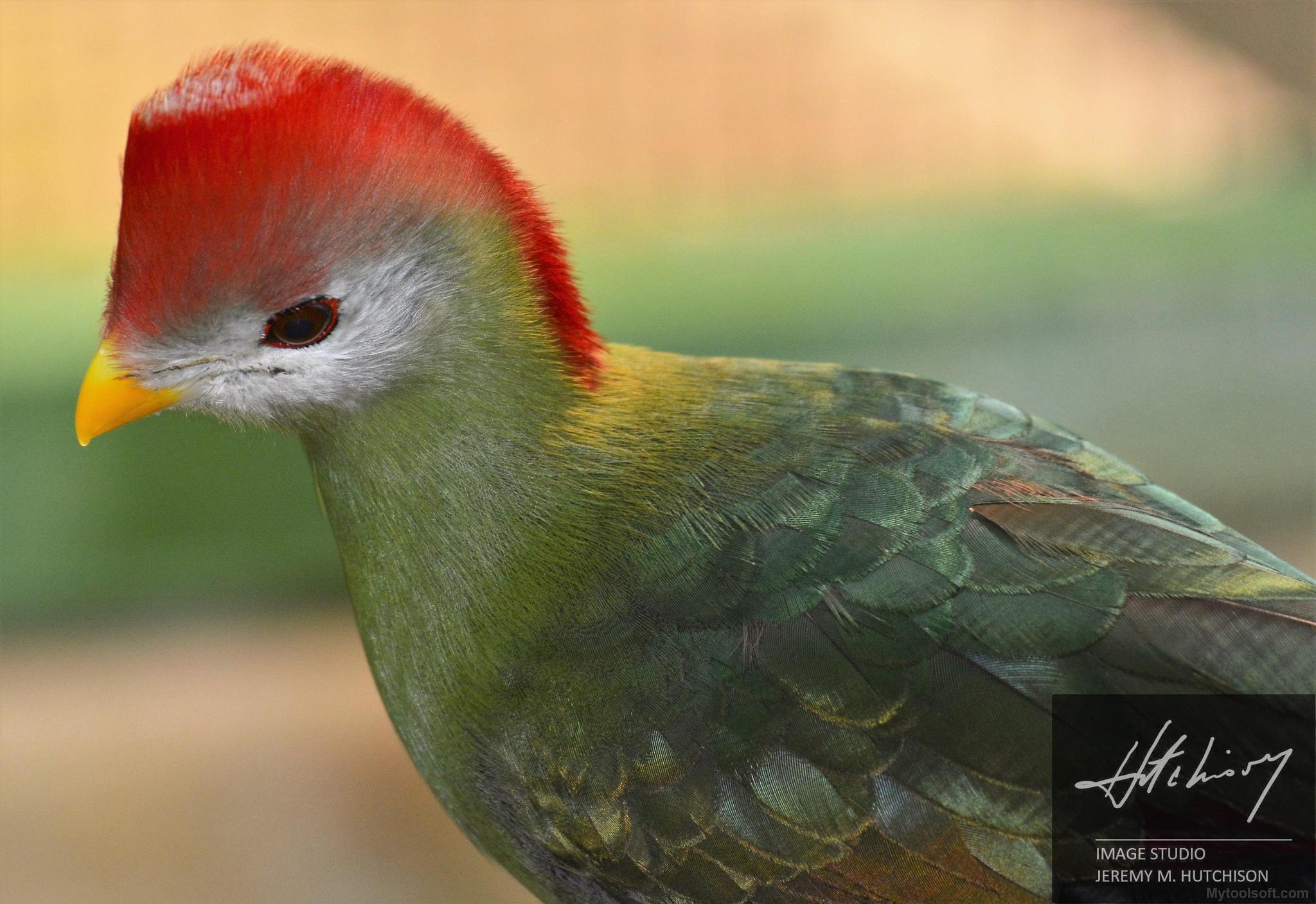 Hillcrest Bird by Jeremy M Hutchison