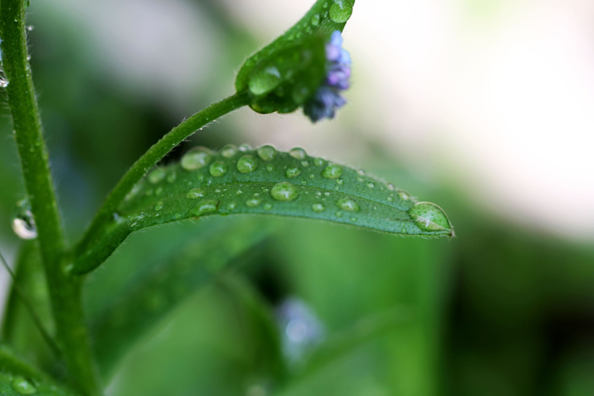Waterdrops by SofiesFoto