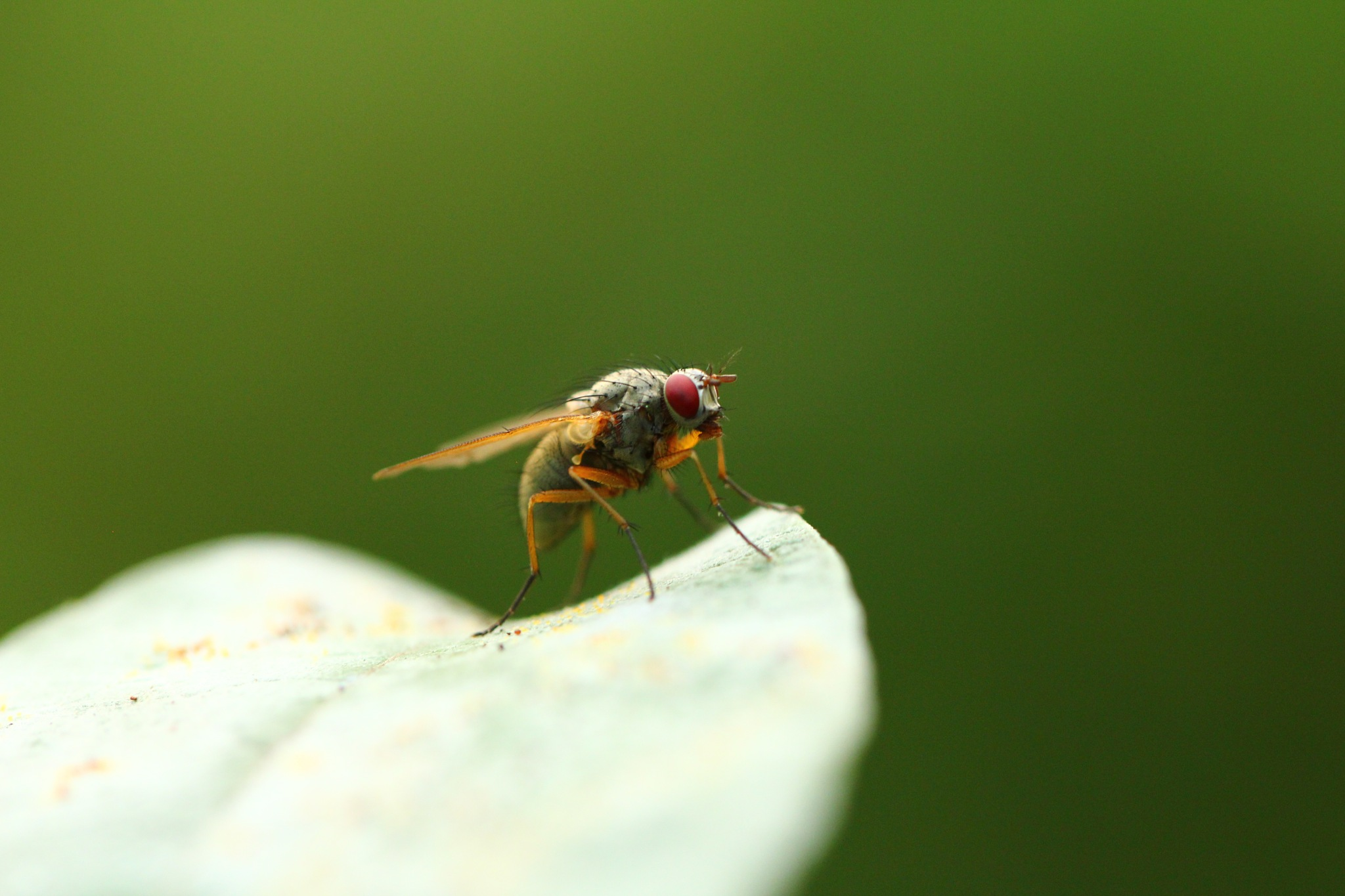 Fly by SofiesFoto