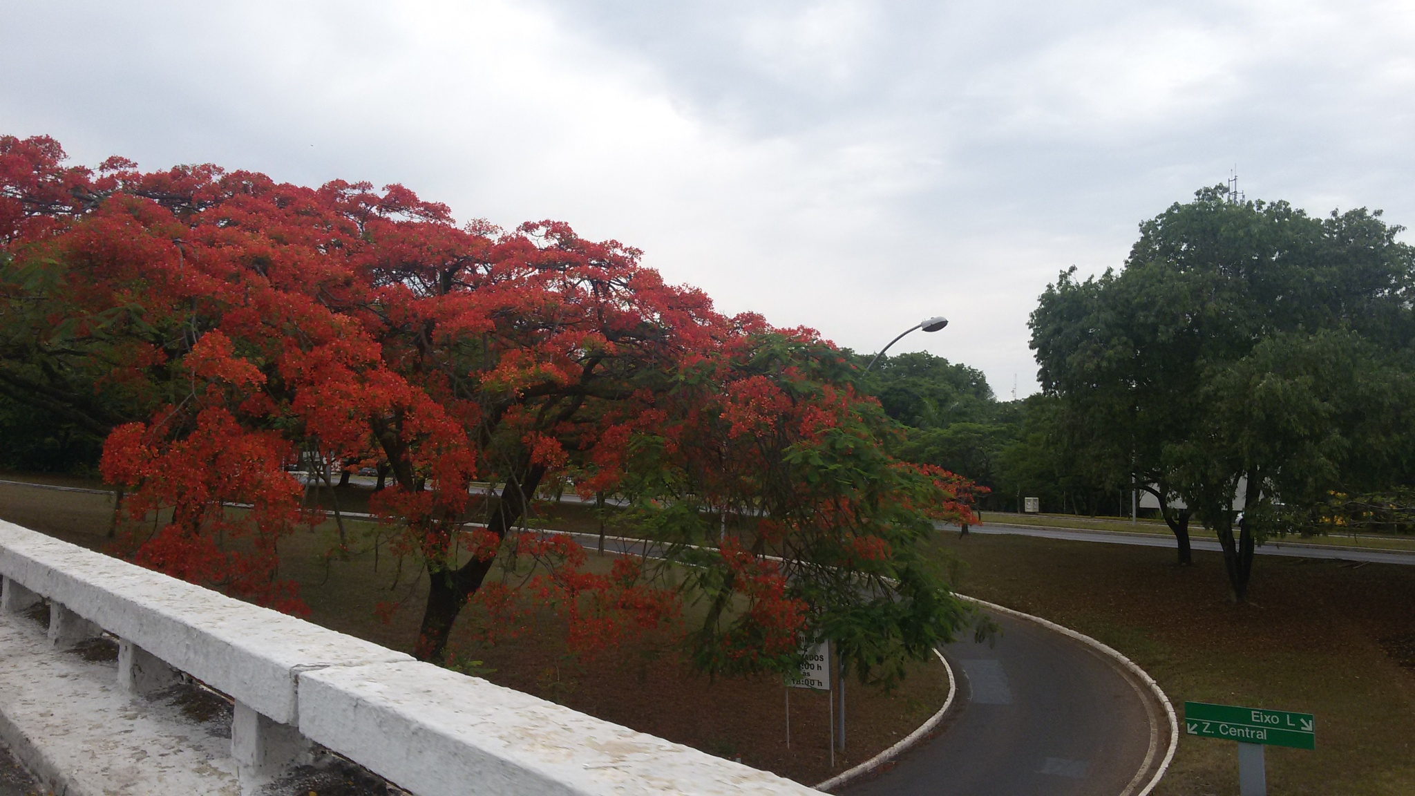 Ruas de Brasília by Ana Rebelo