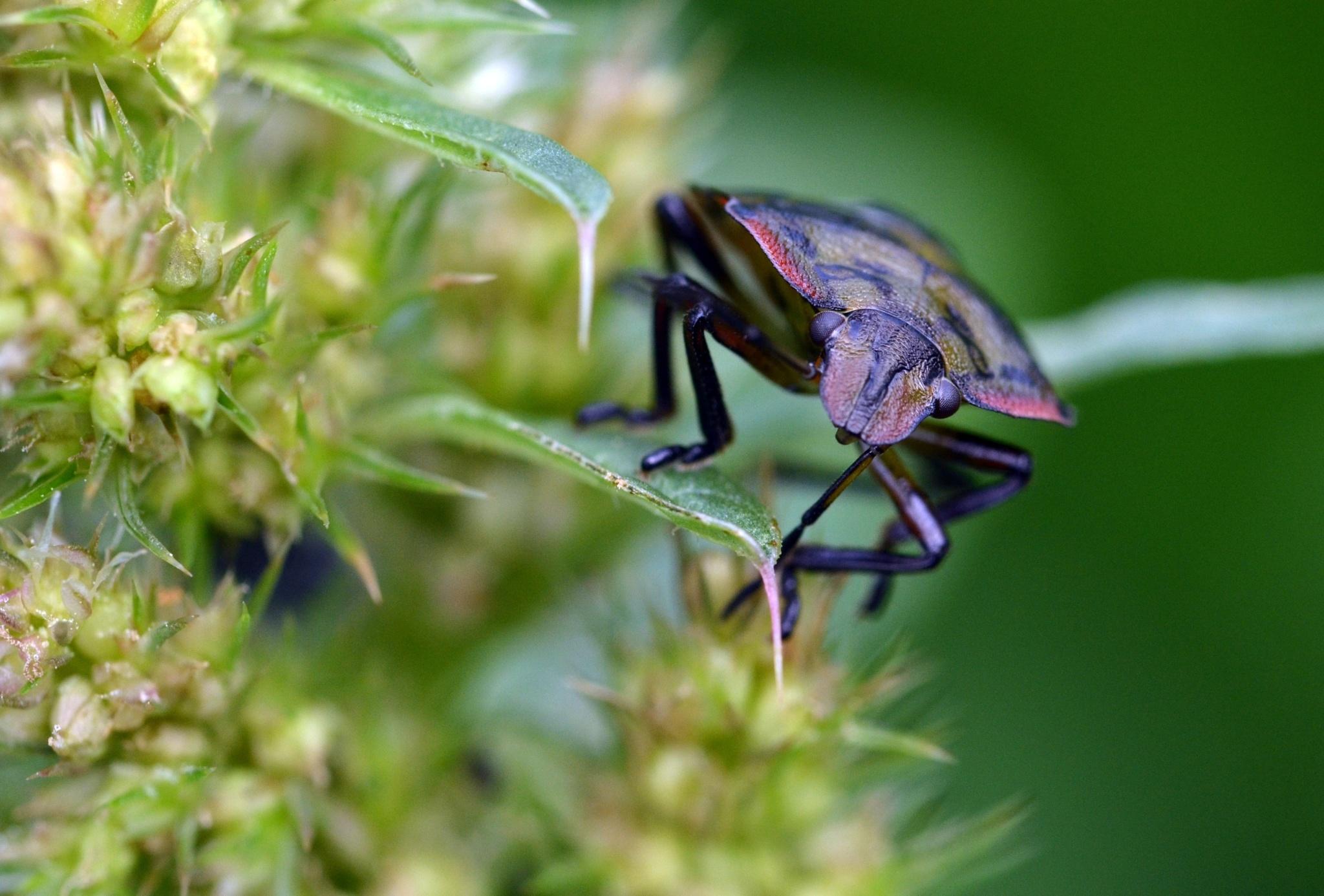 Amazing bug by Bernard Guillon