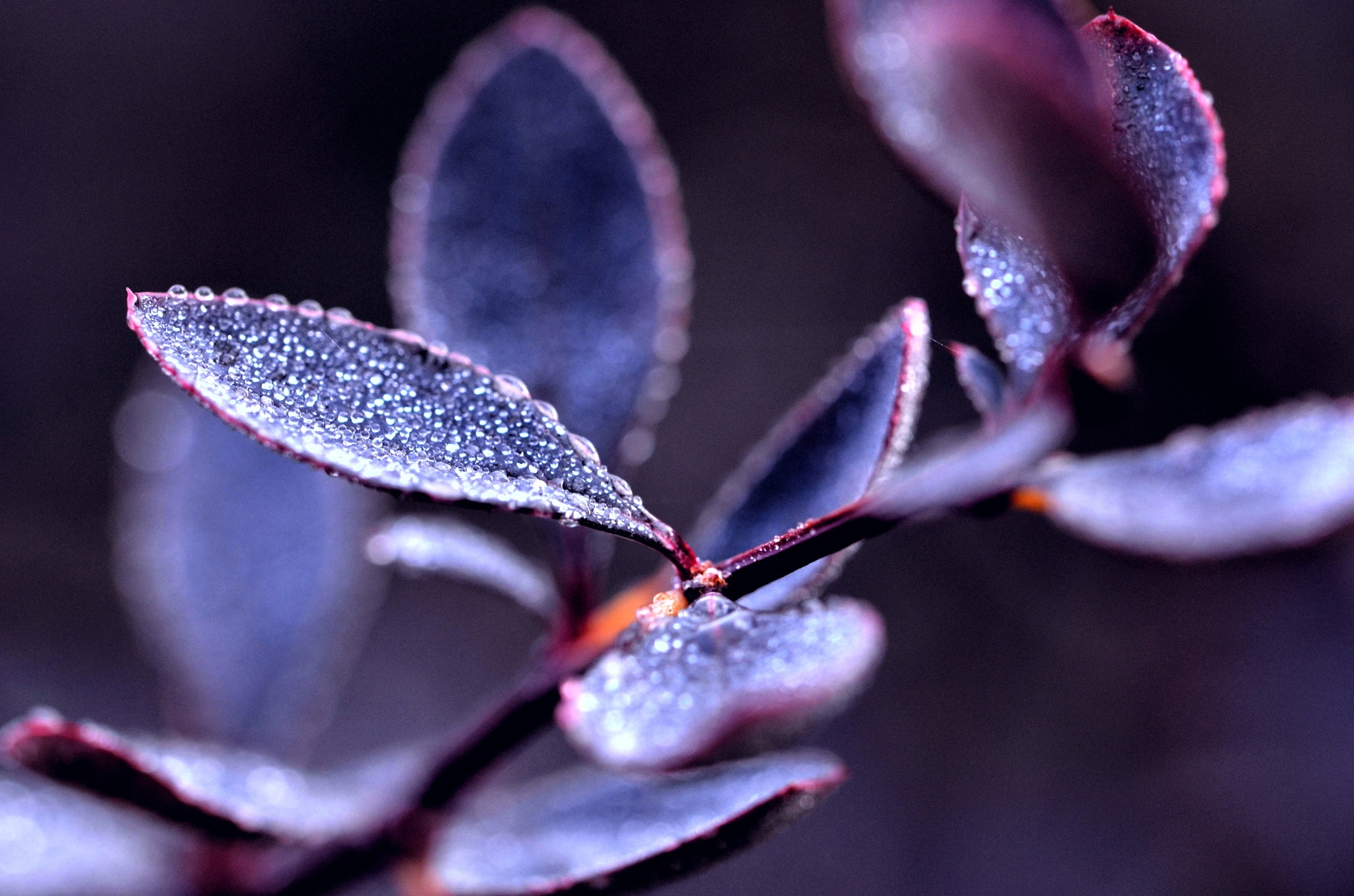 Droplets on leaves by Bernard Guillon
