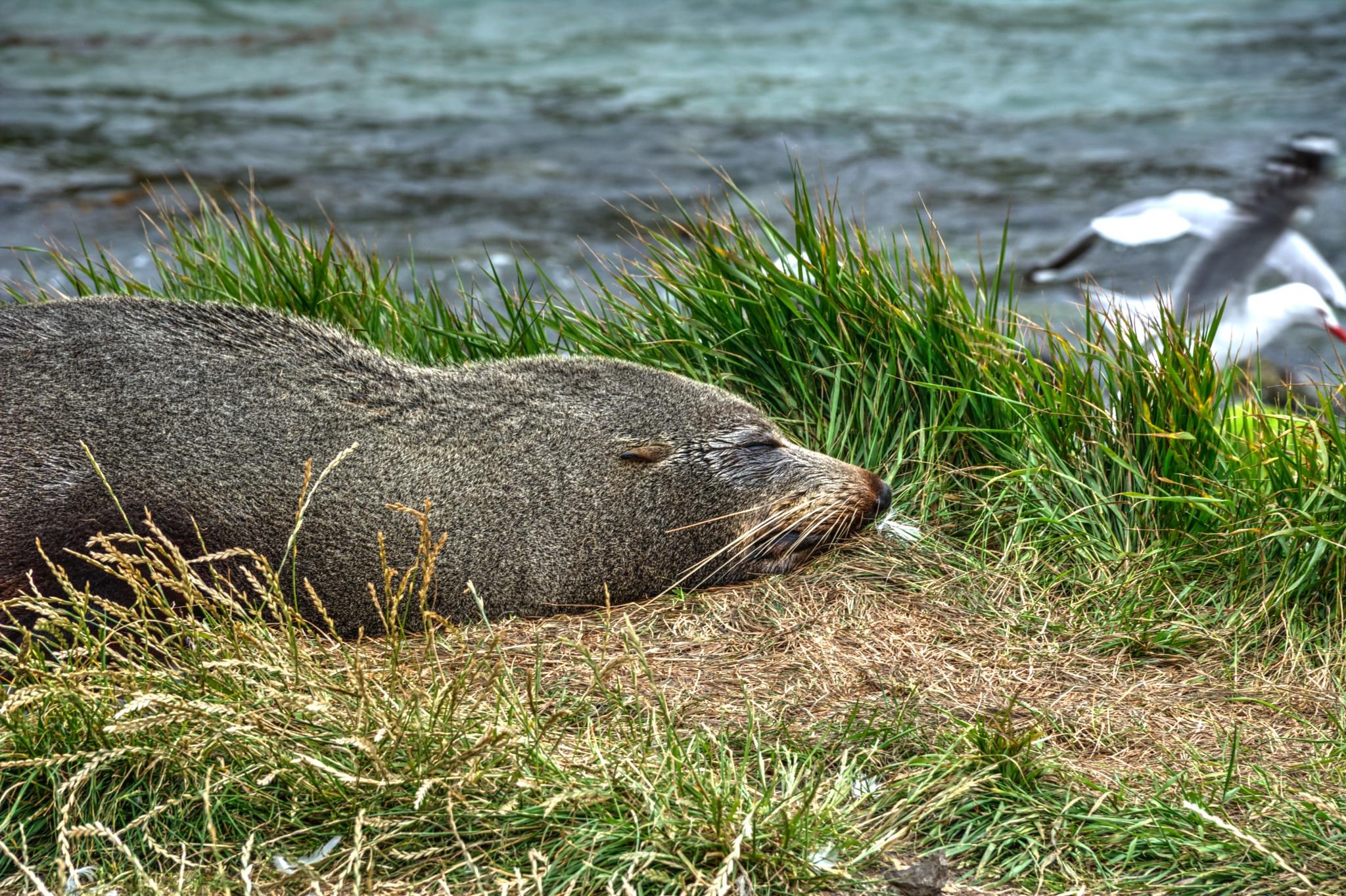 Seal by Jurgen van der Aa