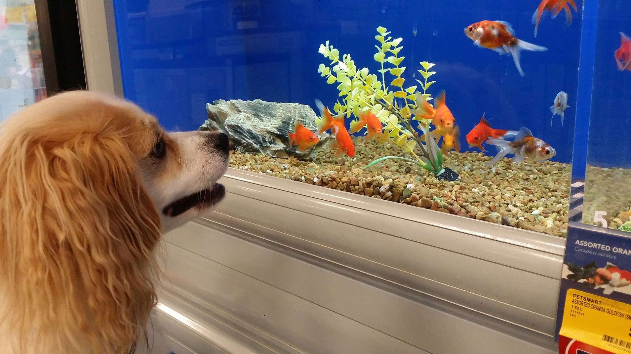 Puppy sees Goldfish for the 1st time by MarthaHerman