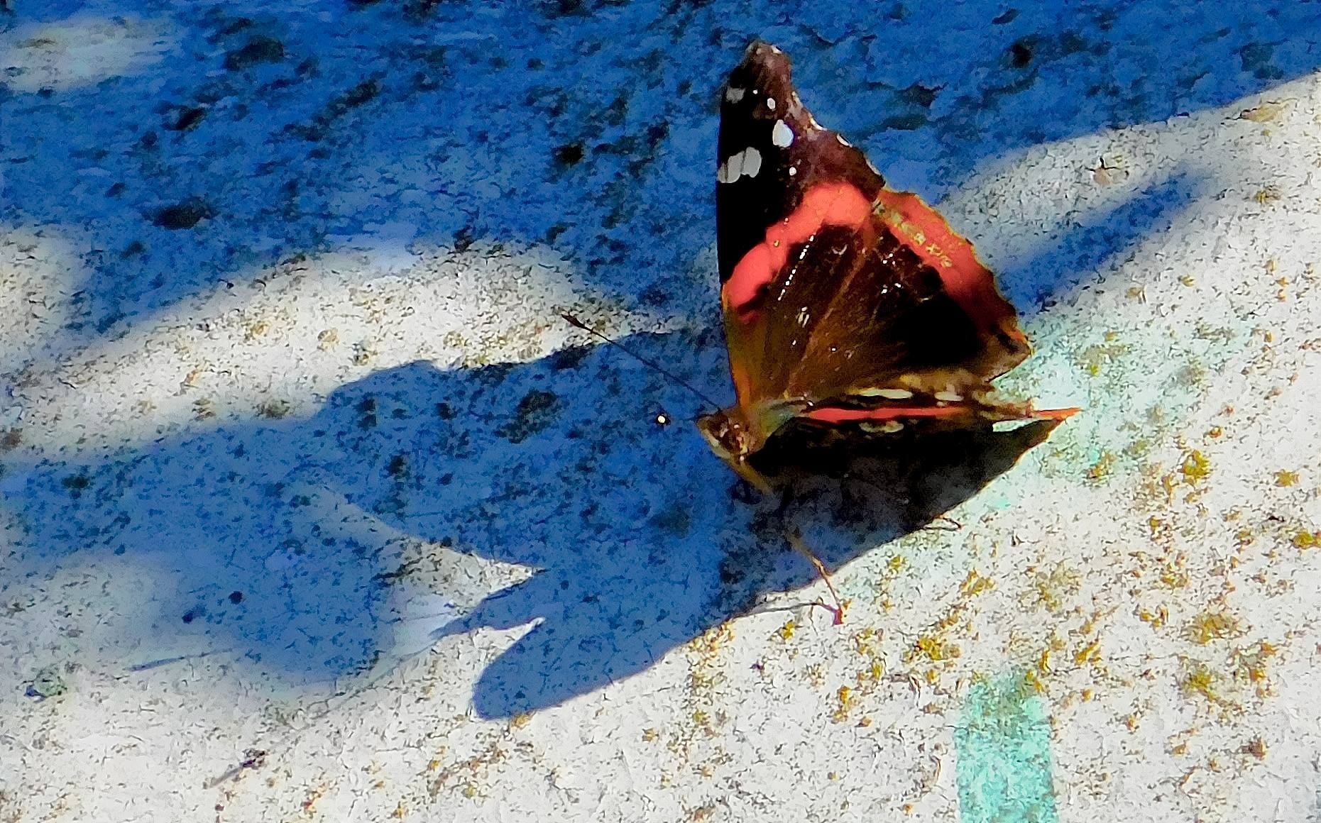 Butterfly Shadow by MarthaHerman