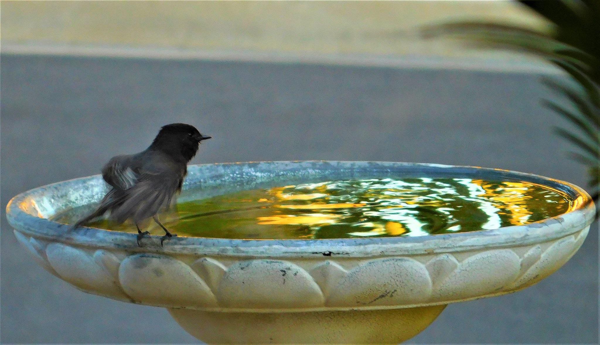 fastidious little bird by MarthaHerman