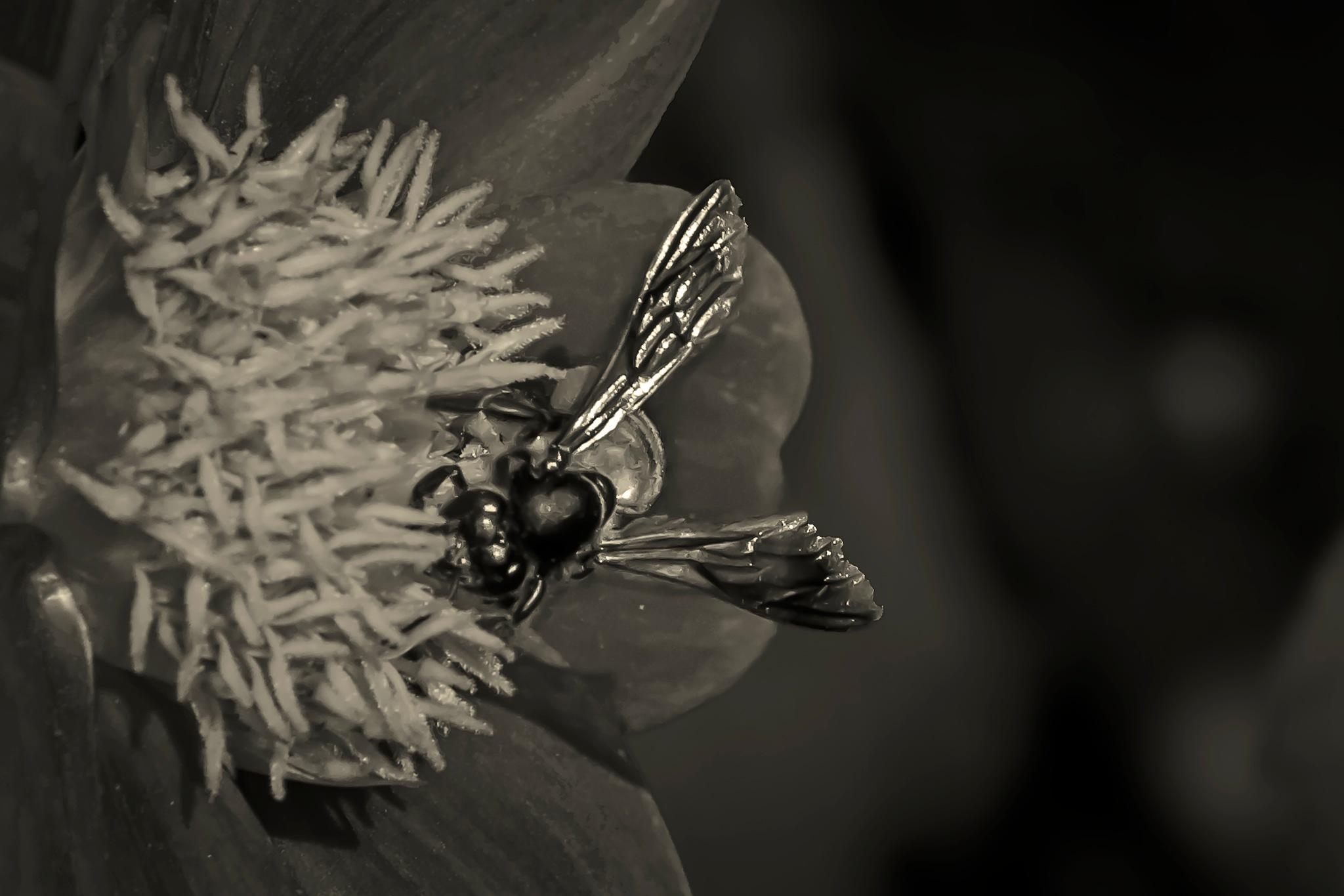 Honey Bee by Swami Prem Sangeet ( Sanjay Jaiswal )
