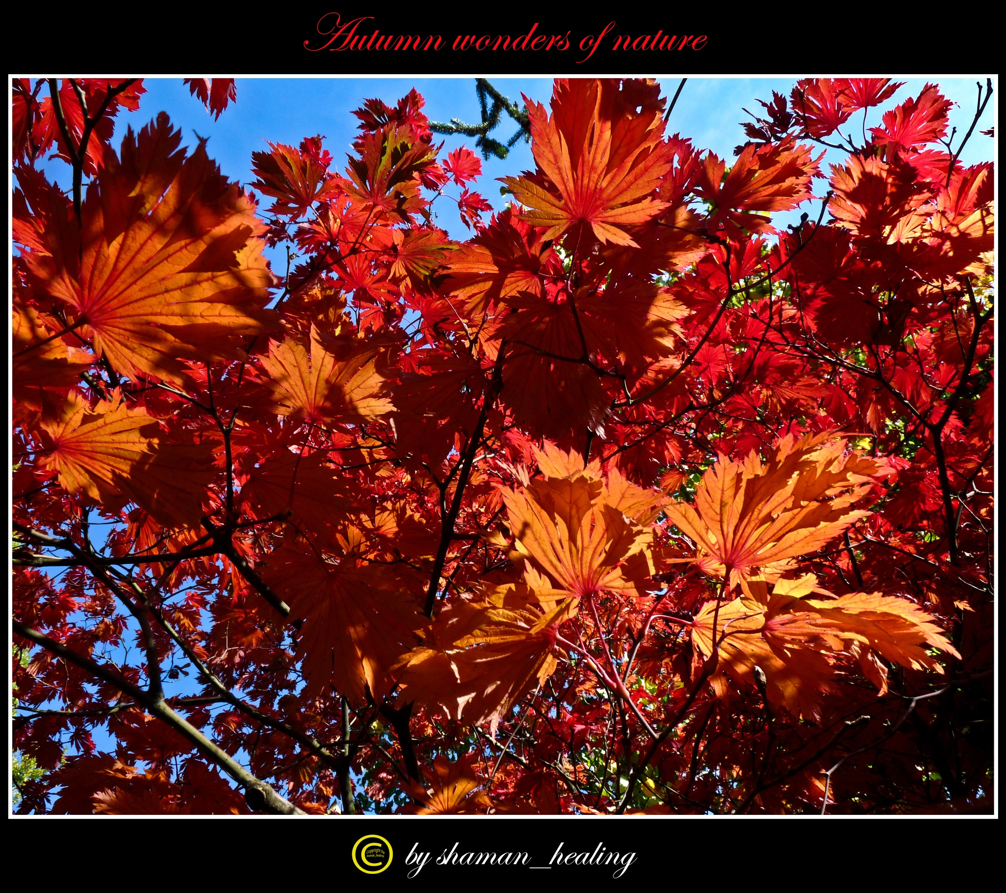 Herbstfeuer by shamanhealingflickr