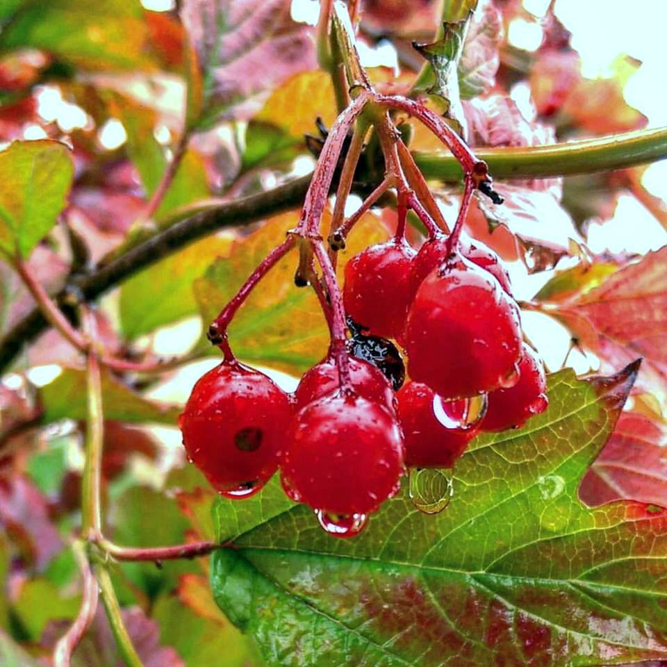 Autumn colors by Dmitriy Sokolov