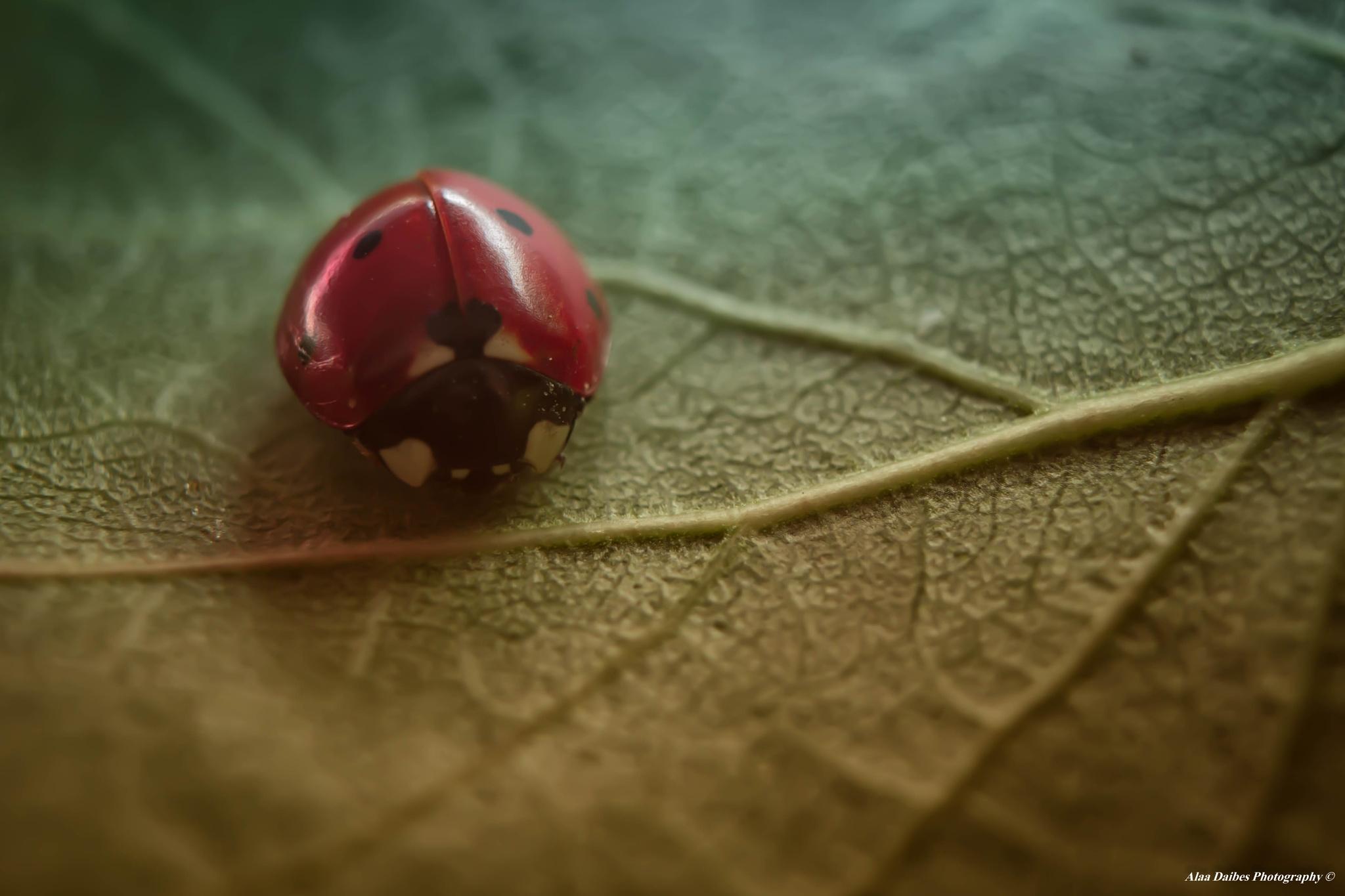 Between Spring & Autumn by Alaa