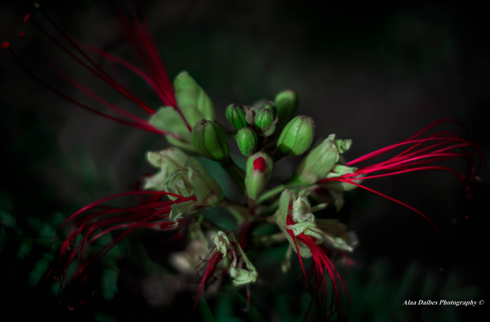 Magical Flower by Alaa