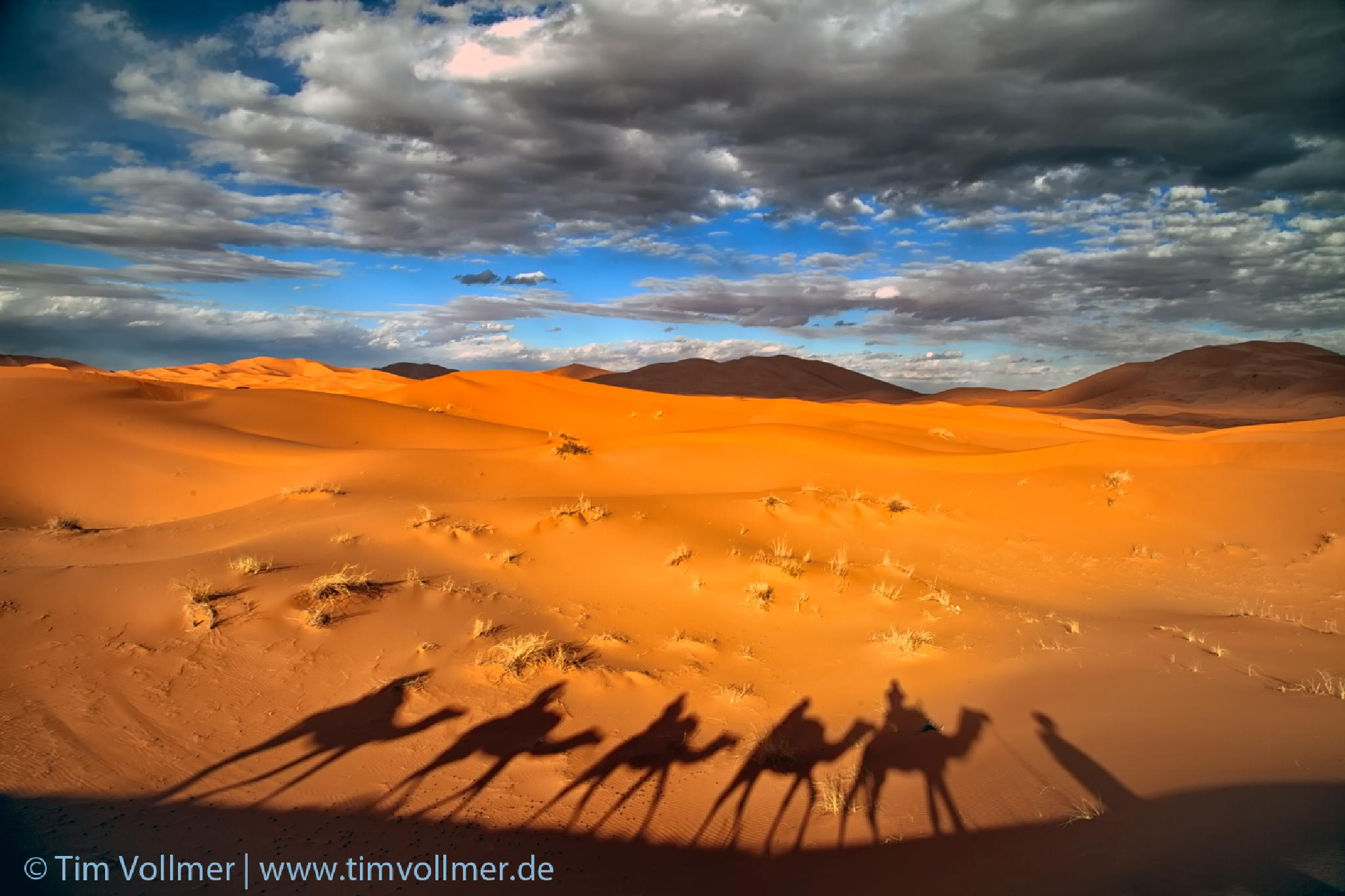 Camel riding by TimVollmerPhotography