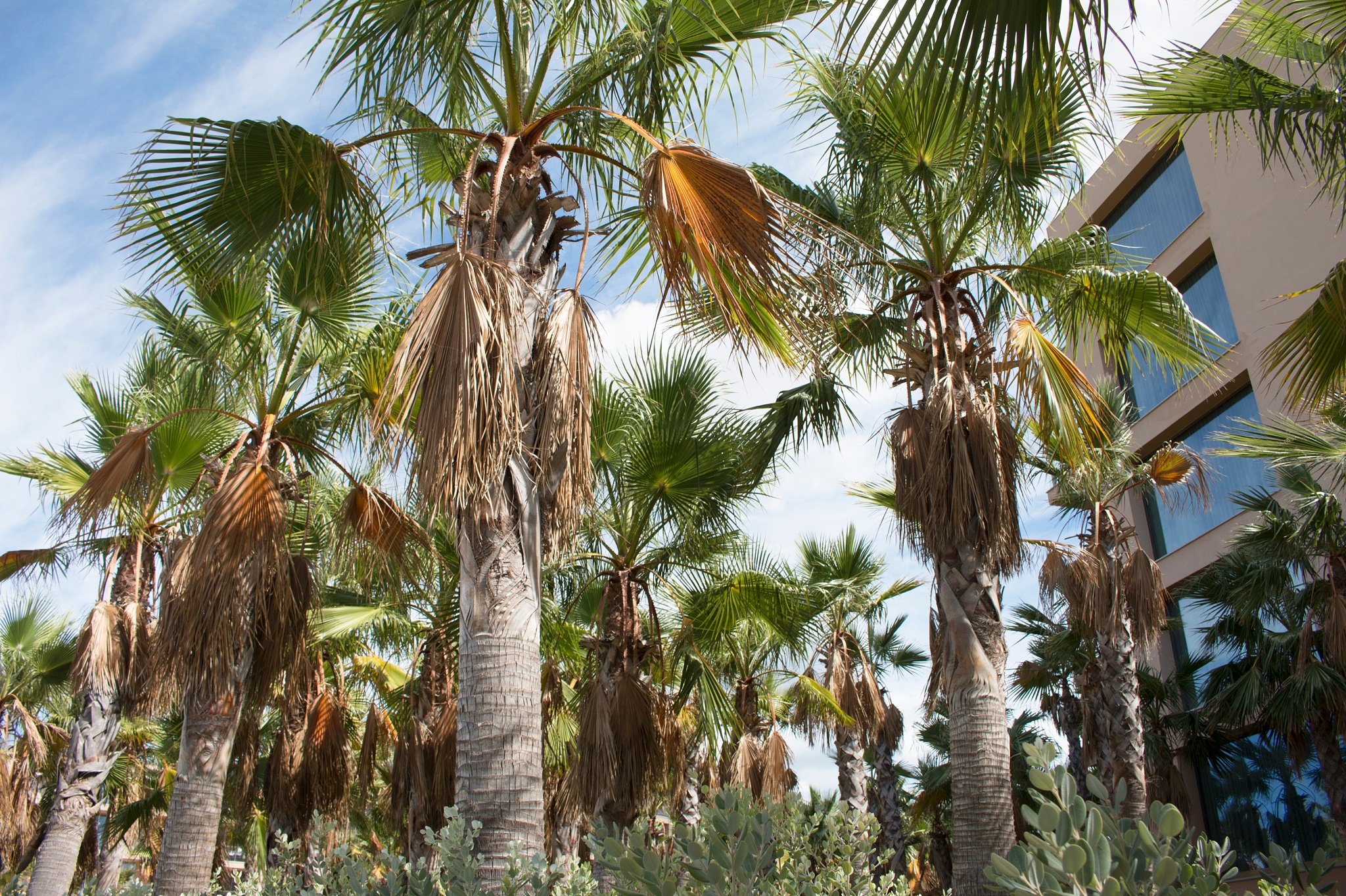 Palm trees by Alexandra Pedro