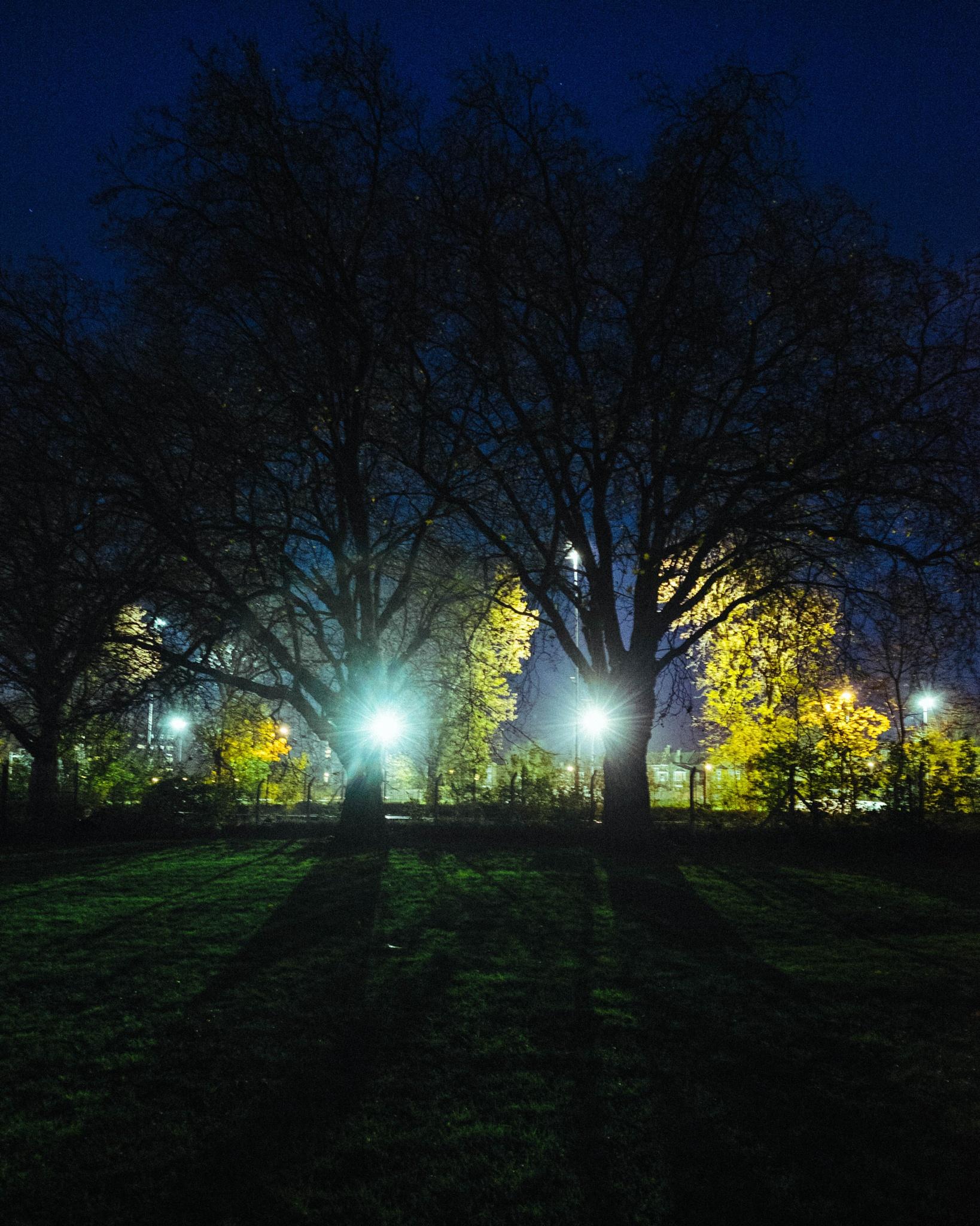 Tree Eyes by Scott Raw