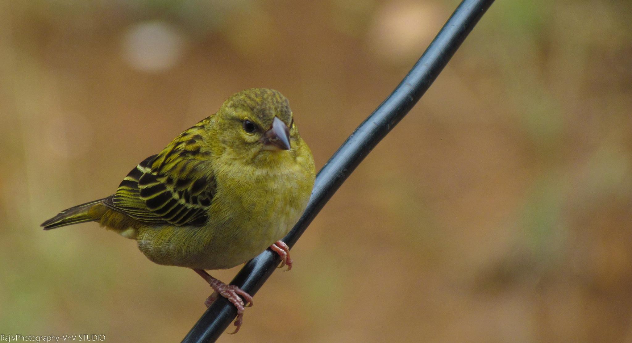Bird Photography! by RajivPhotography