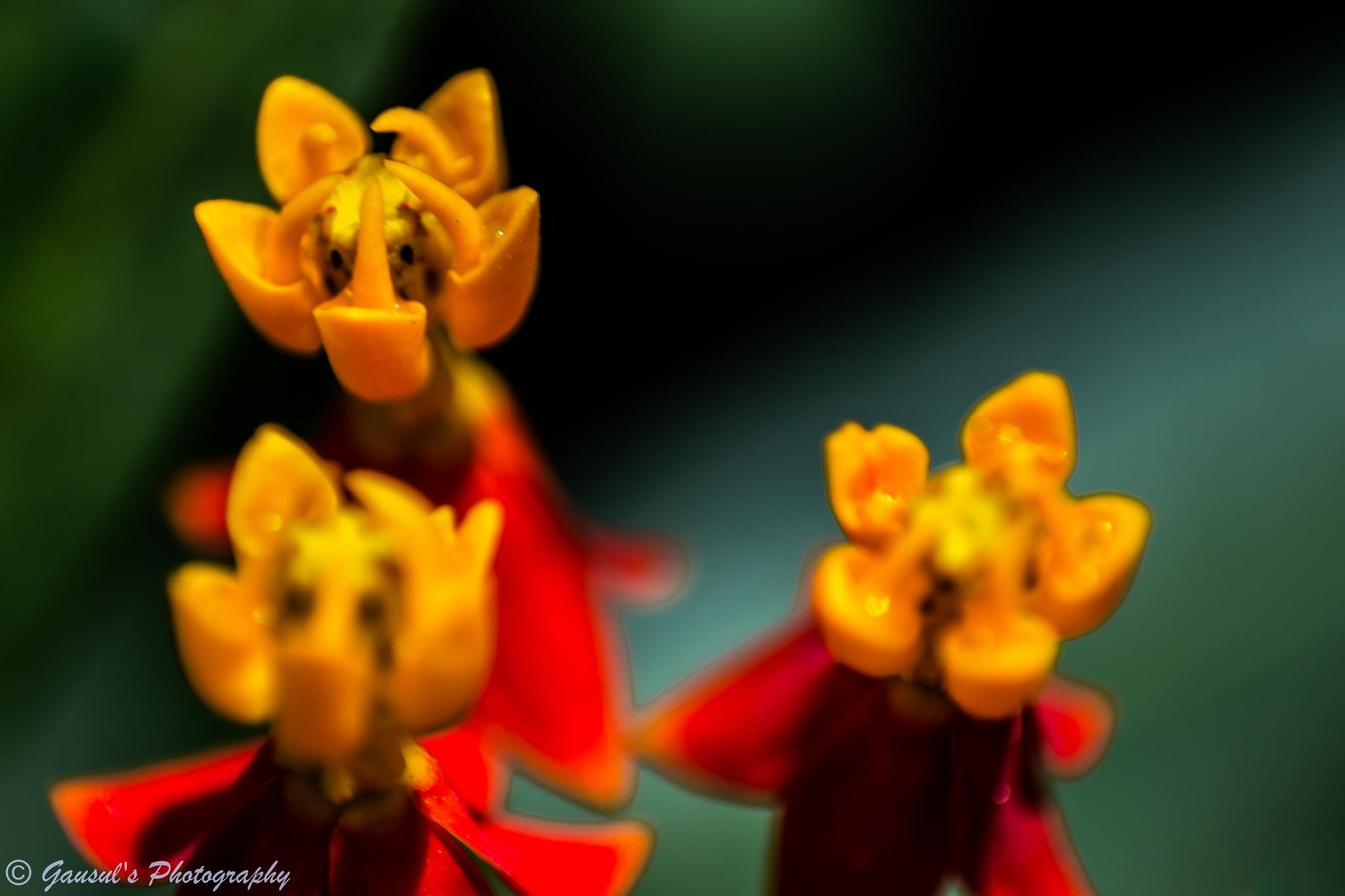 Macro - 11 (Flower) by Gausul Azam
