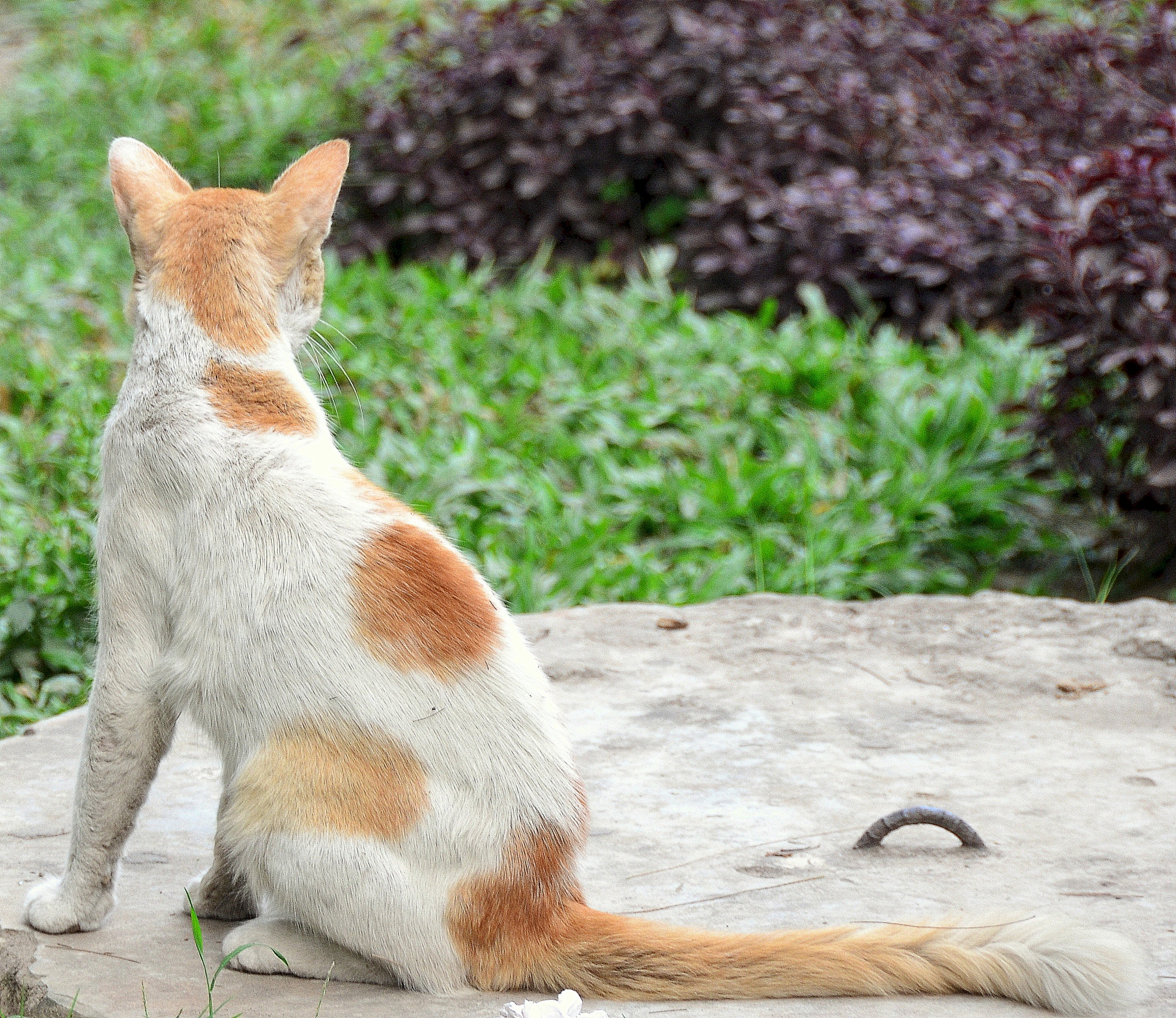 Cat Watching over by Gausul Azam