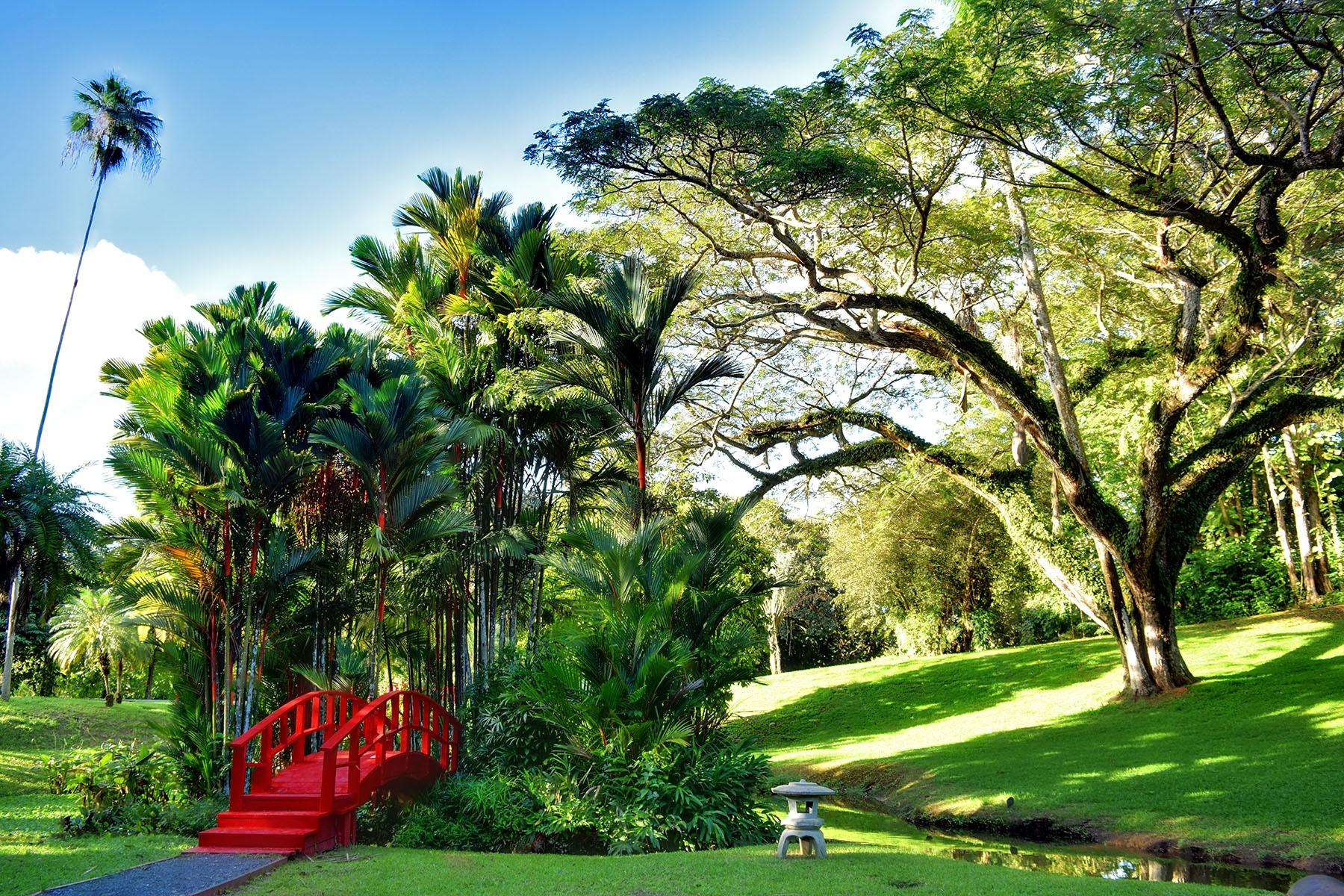 Garden2 by Rosa J. Soto Amill