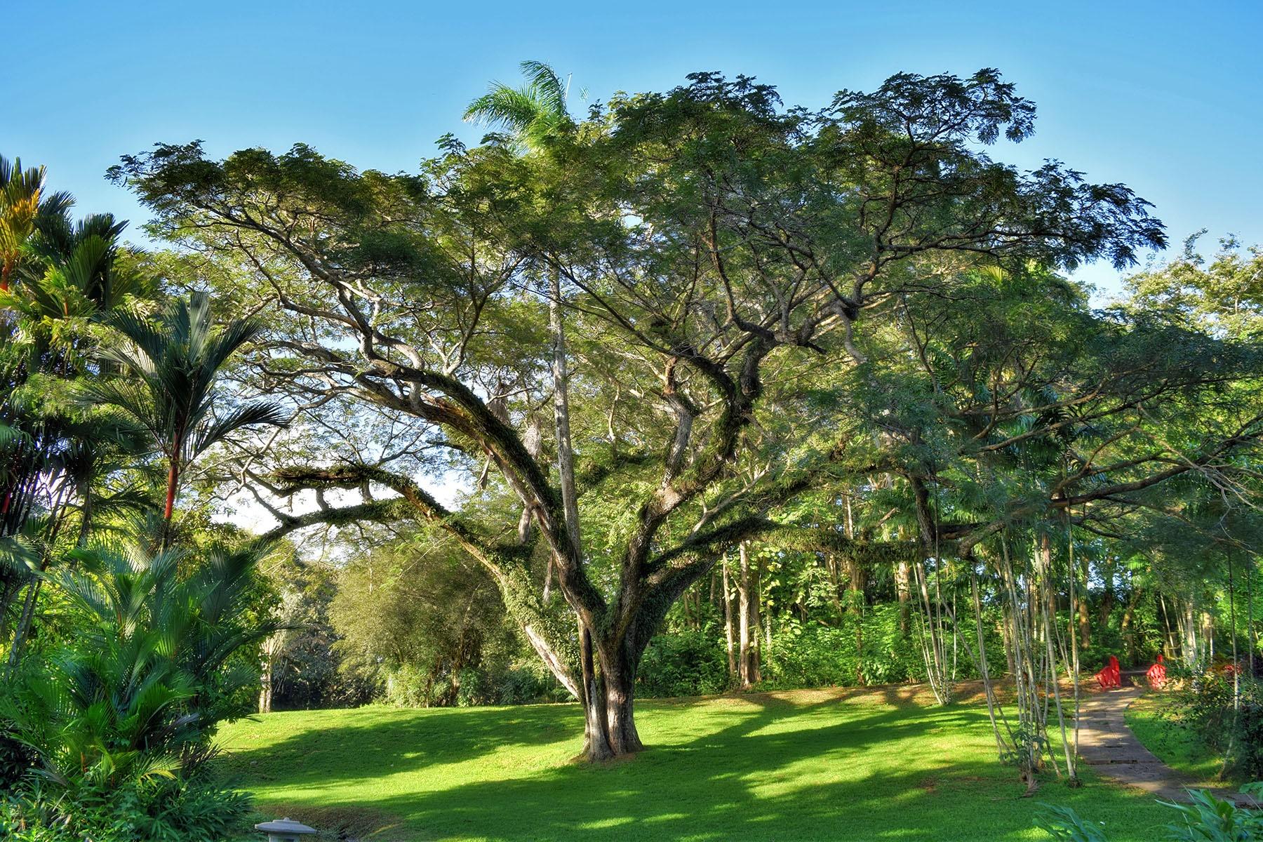 Photo in HDRI #tree #big #hdr #botanic garden
