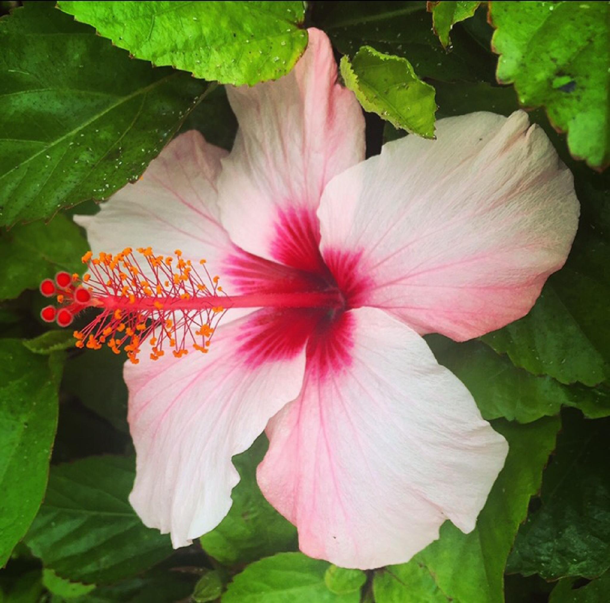 Beautiful flower by Carlsberg83